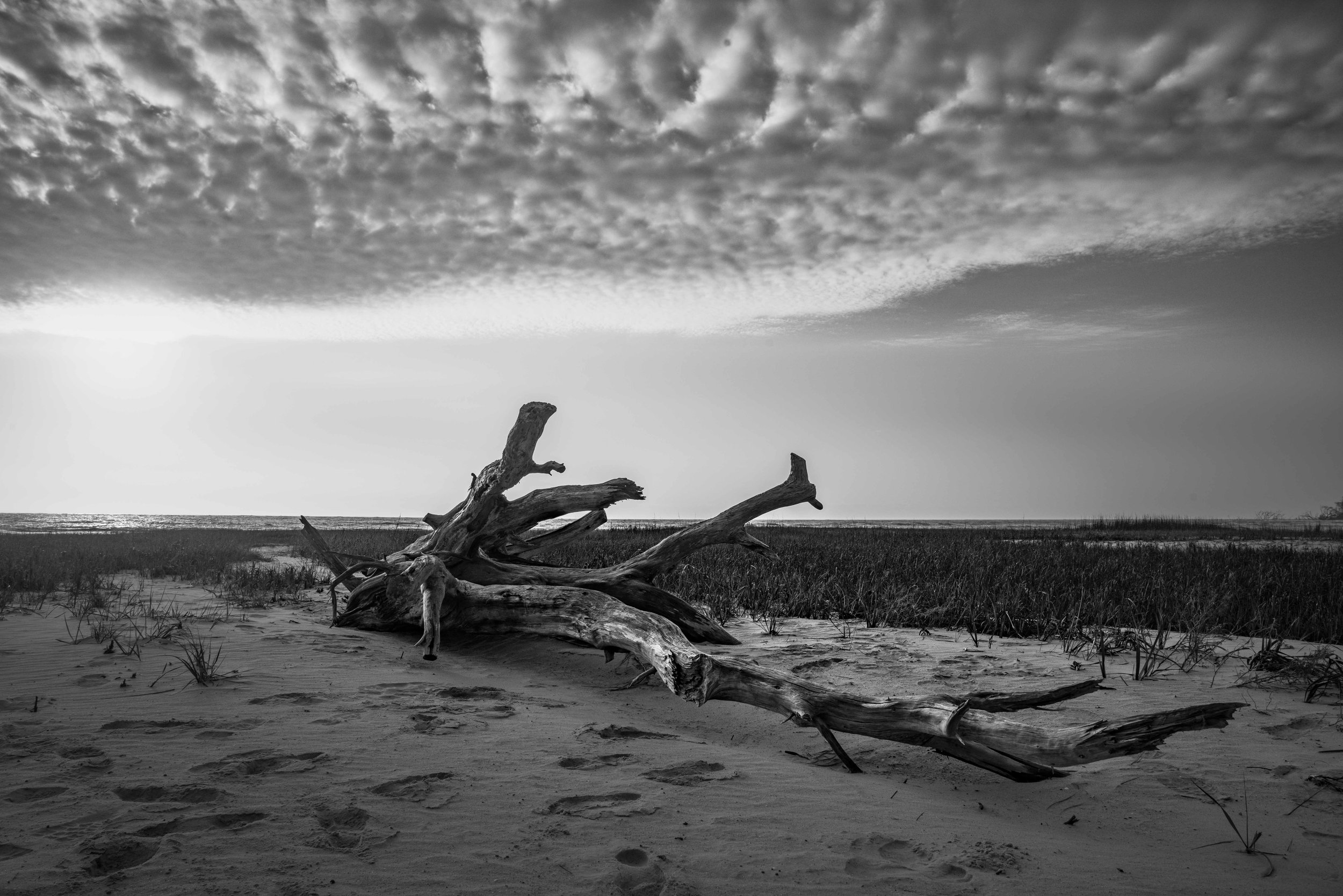 Driftwood and clouds on Little Tybee Island via micahdeyoung.com