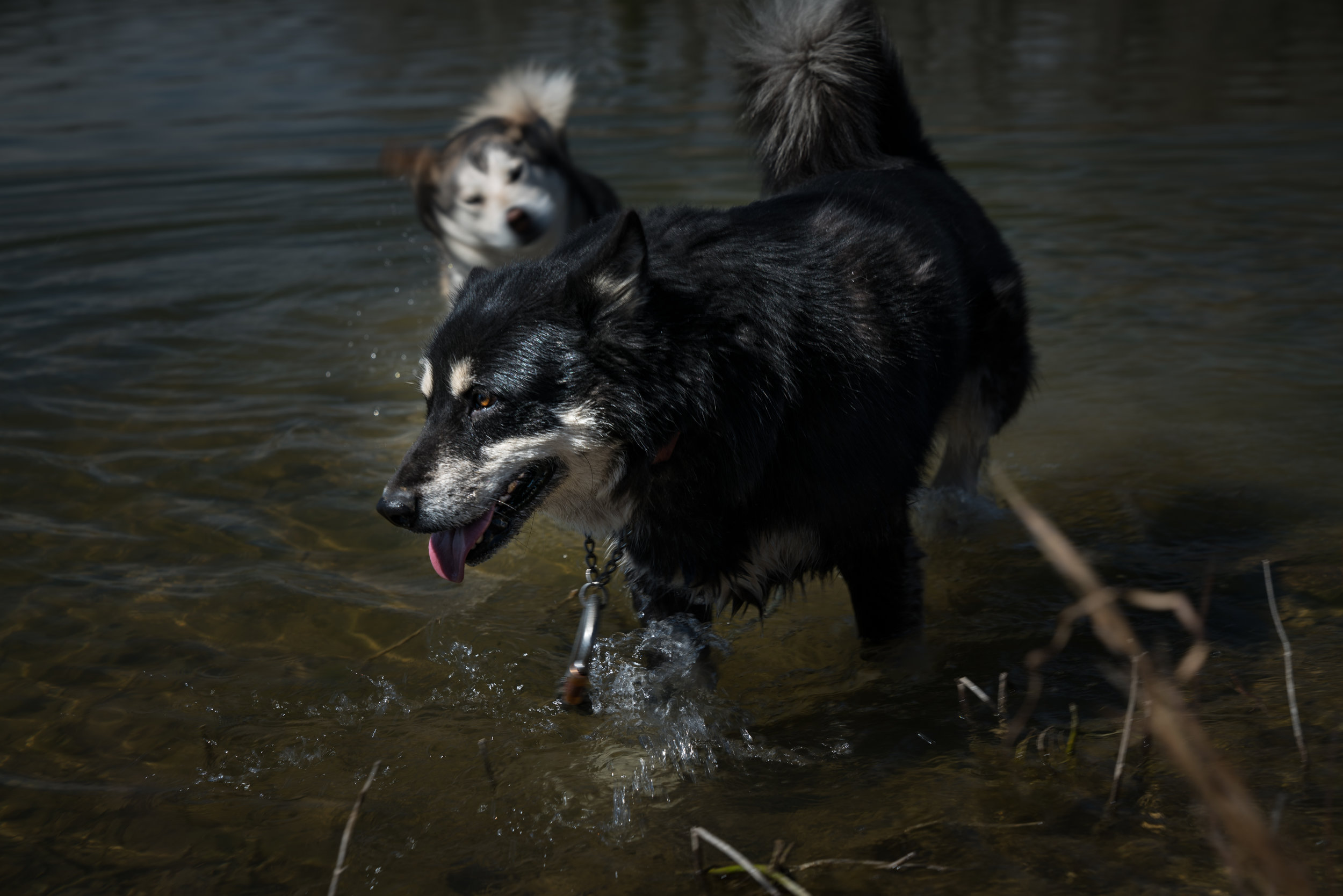 Dogs swimming via micahdeyoung.com