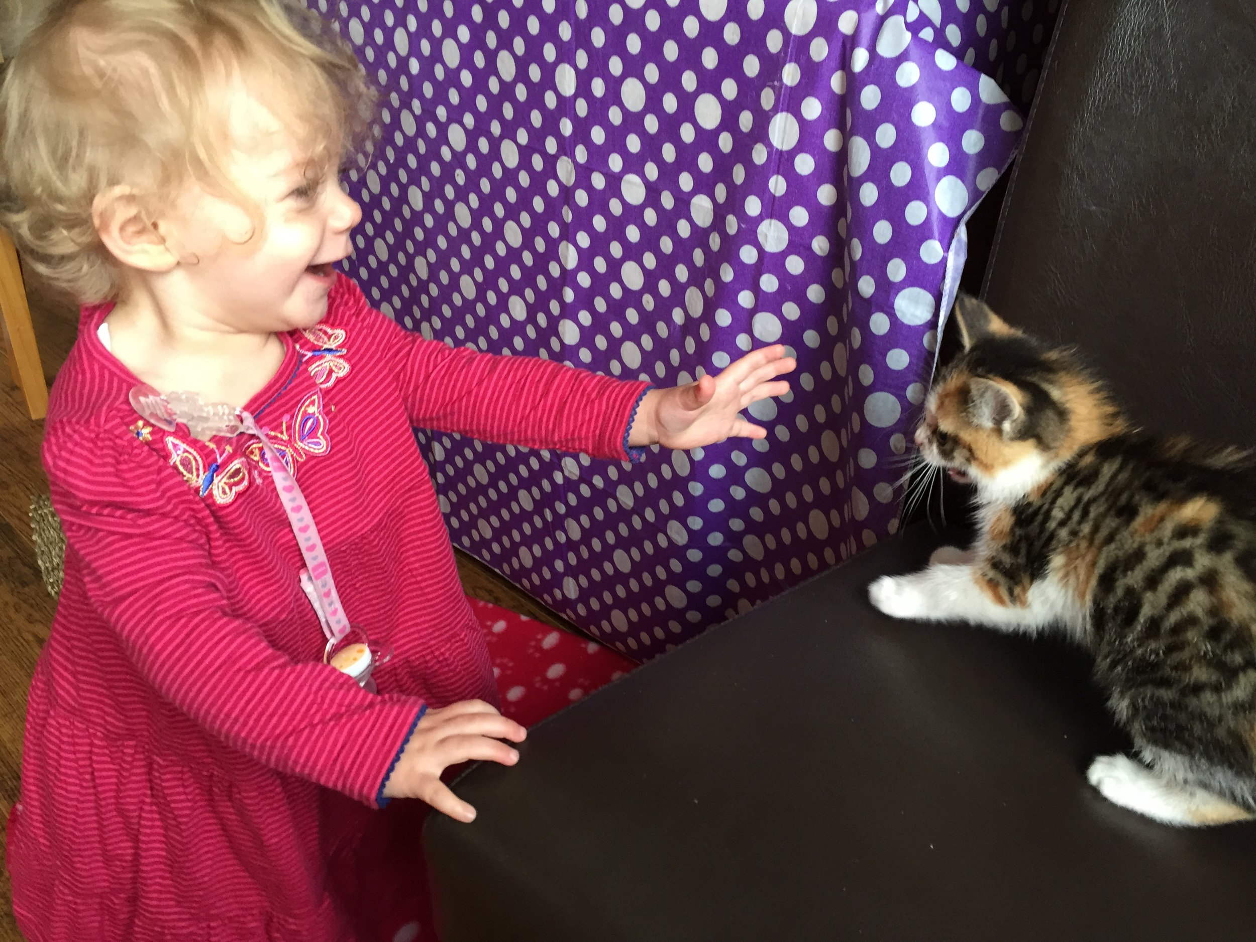 toddler and kitten © mebecomingmum