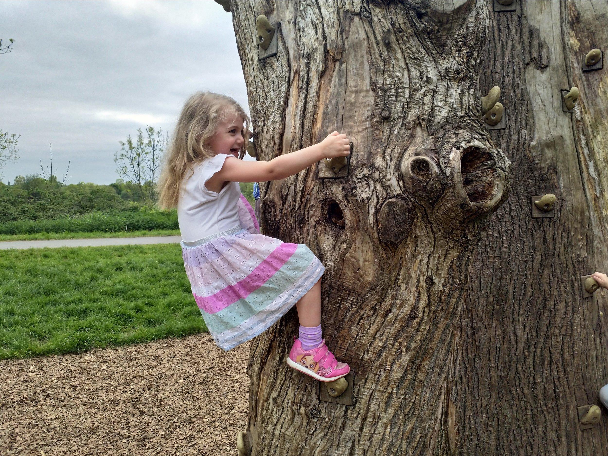 Cloimbing wall tree trunk Ferry Meadows Nene Park Peterborough