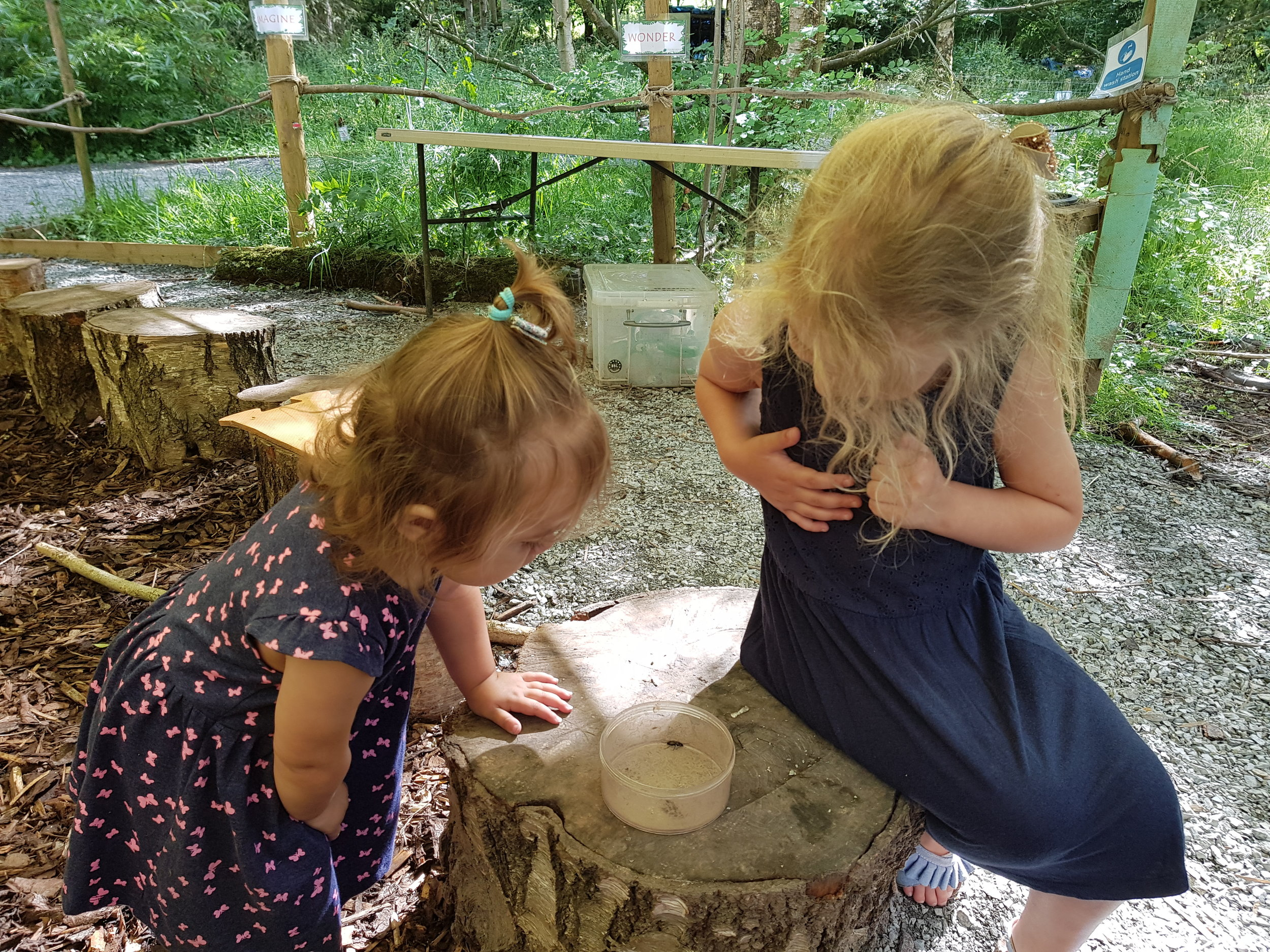 catching bugs at stocks wood outdoor centre