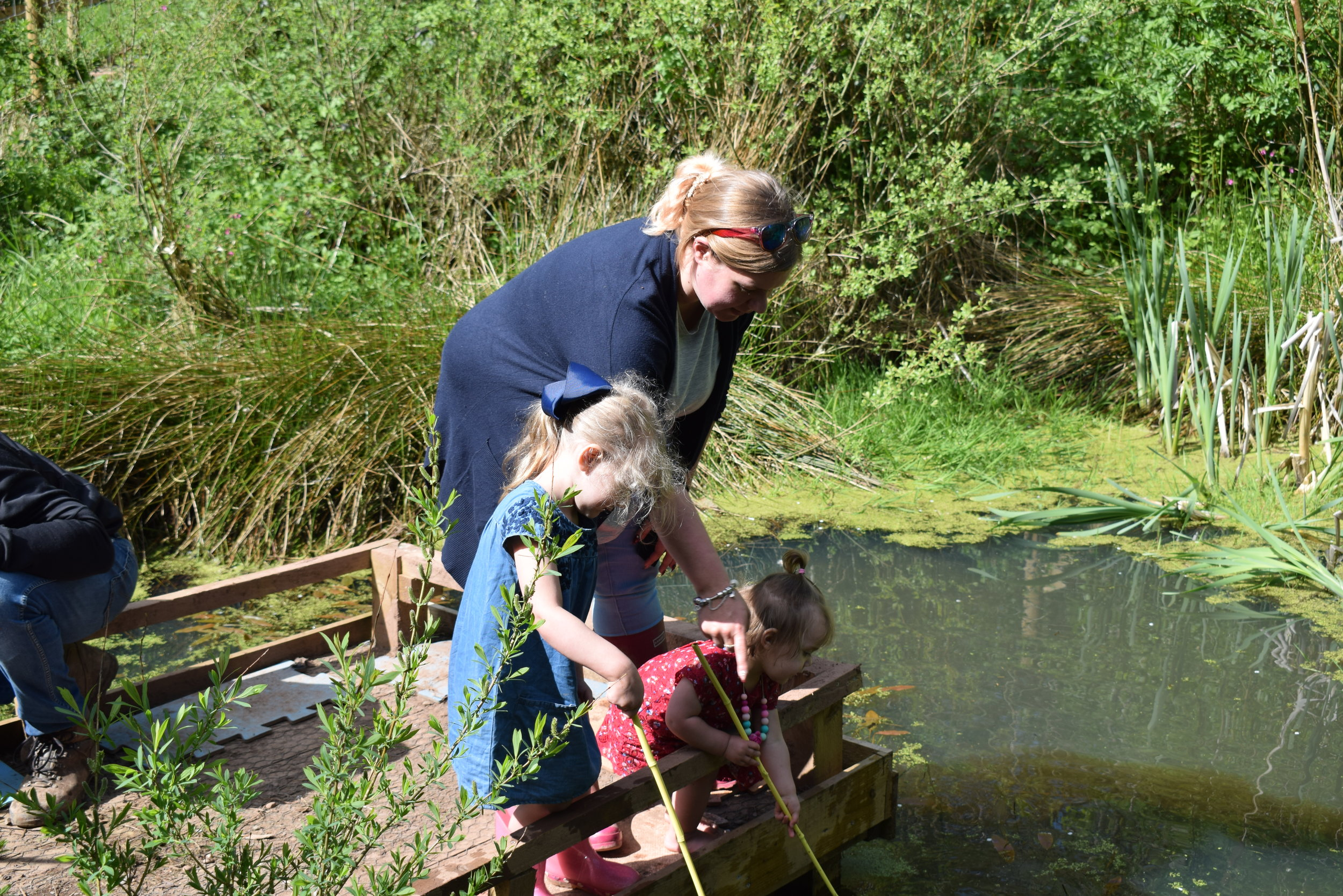 pond dipping in the woodland