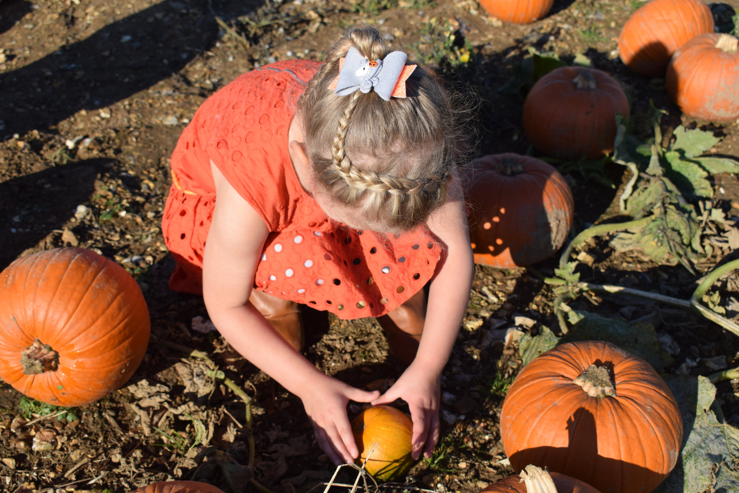 Squidgy pumpkin picking at The Pop-Up Farm pumpkin patch