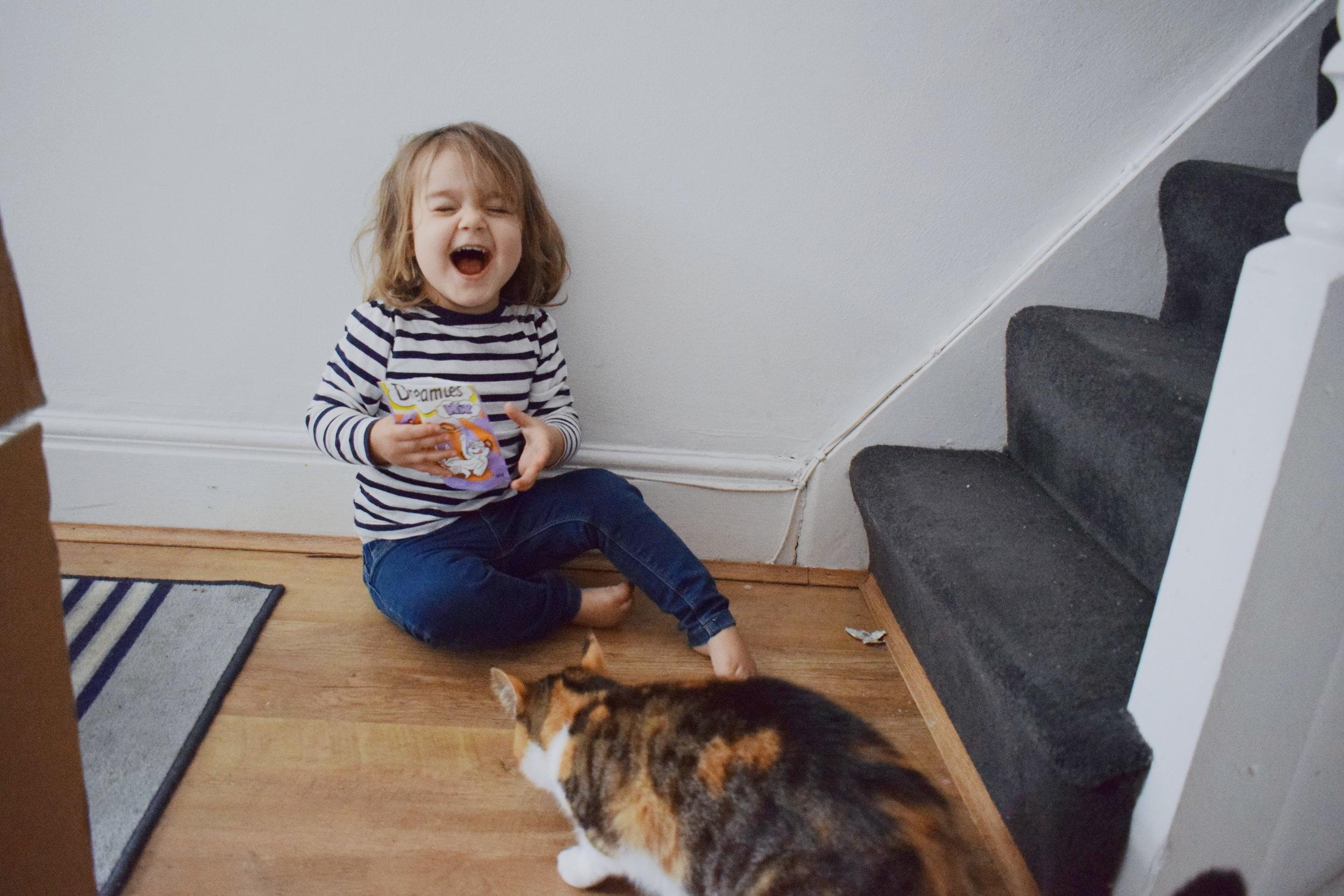 Feeding our pet cat Dreamies