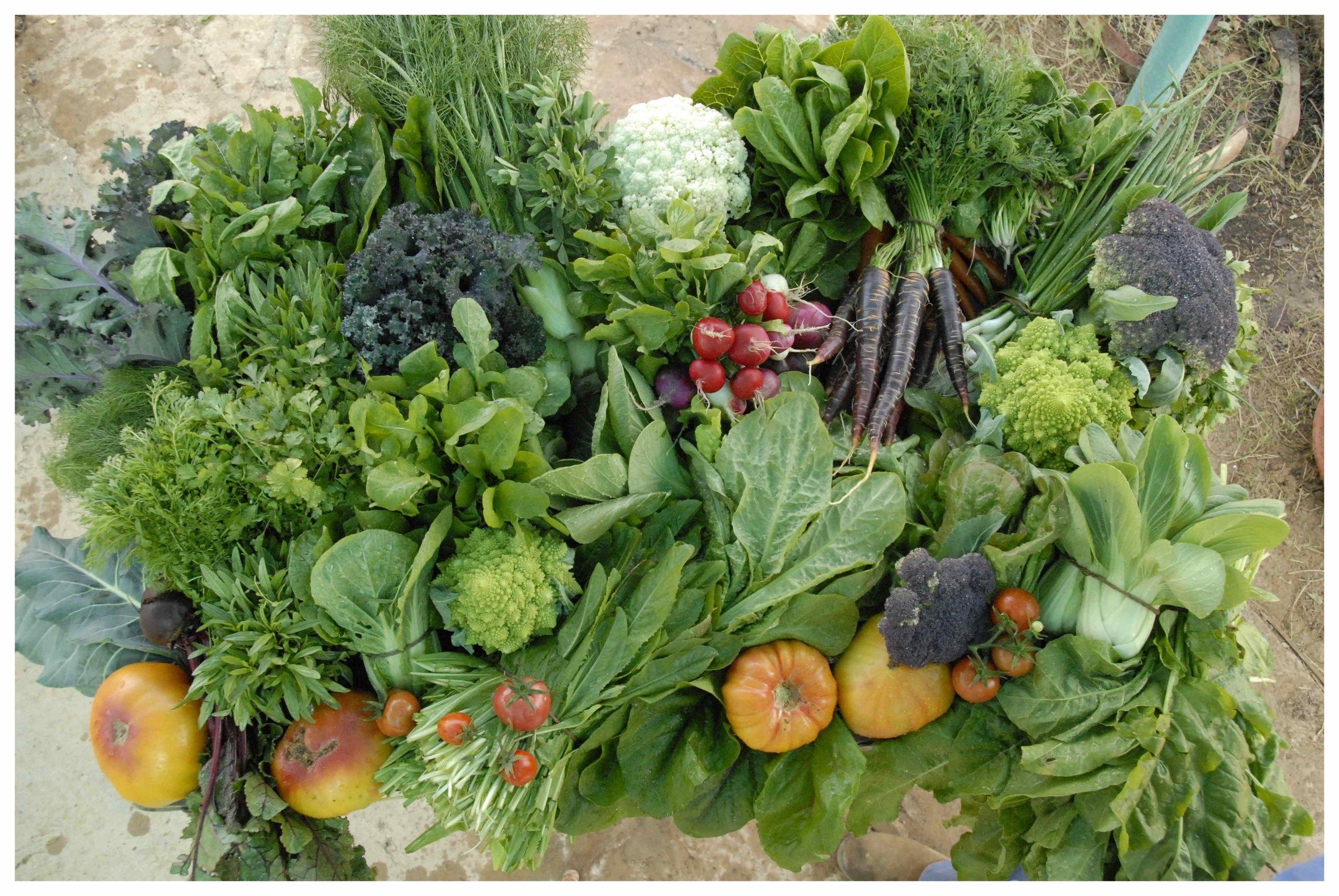 SAorganic veg.1.jpg