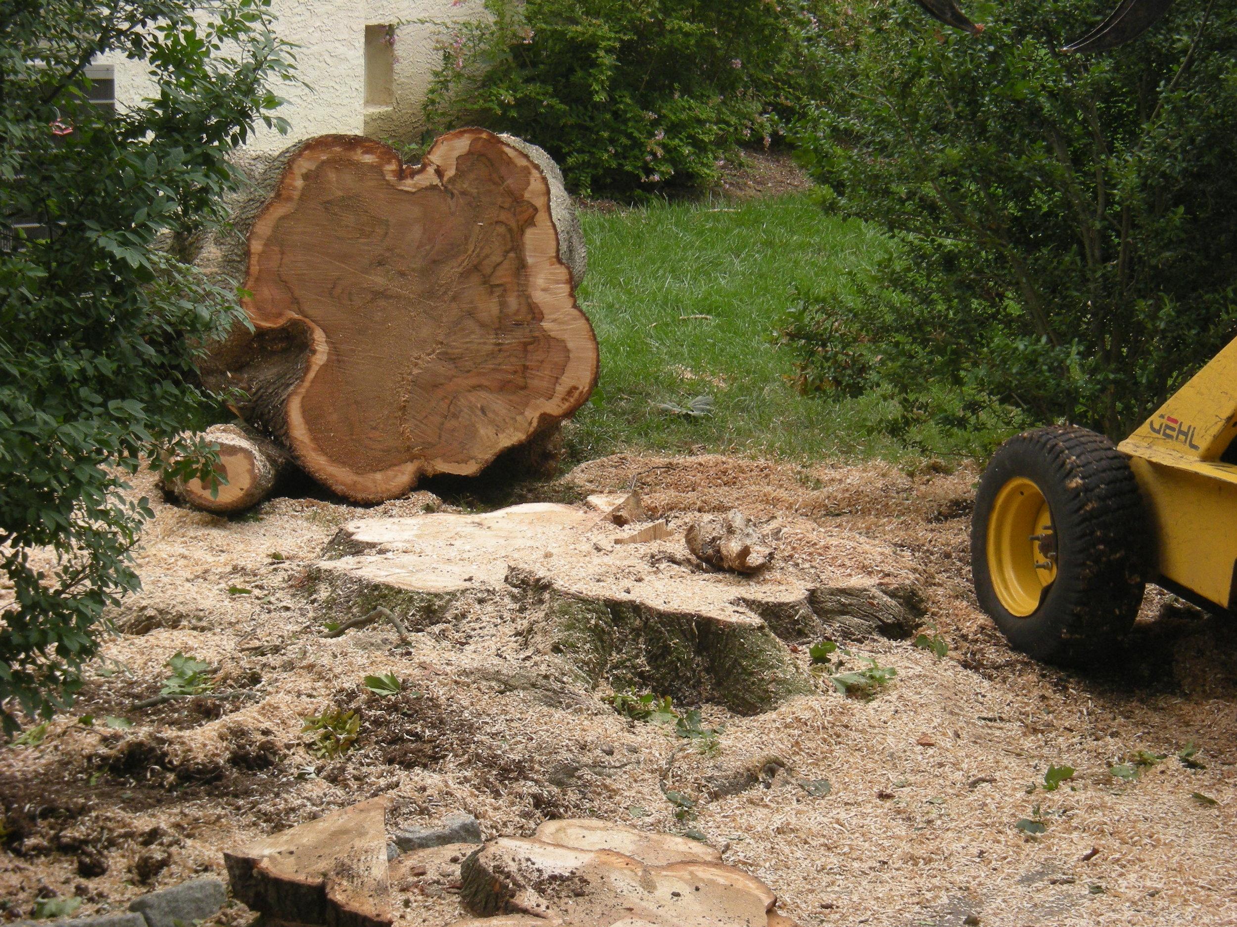 Tree Removal.jpg