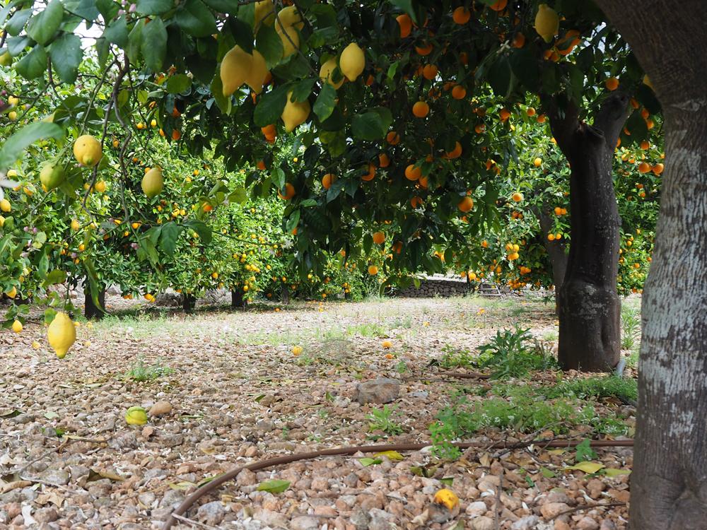 ecovinyassa oranges.jpg