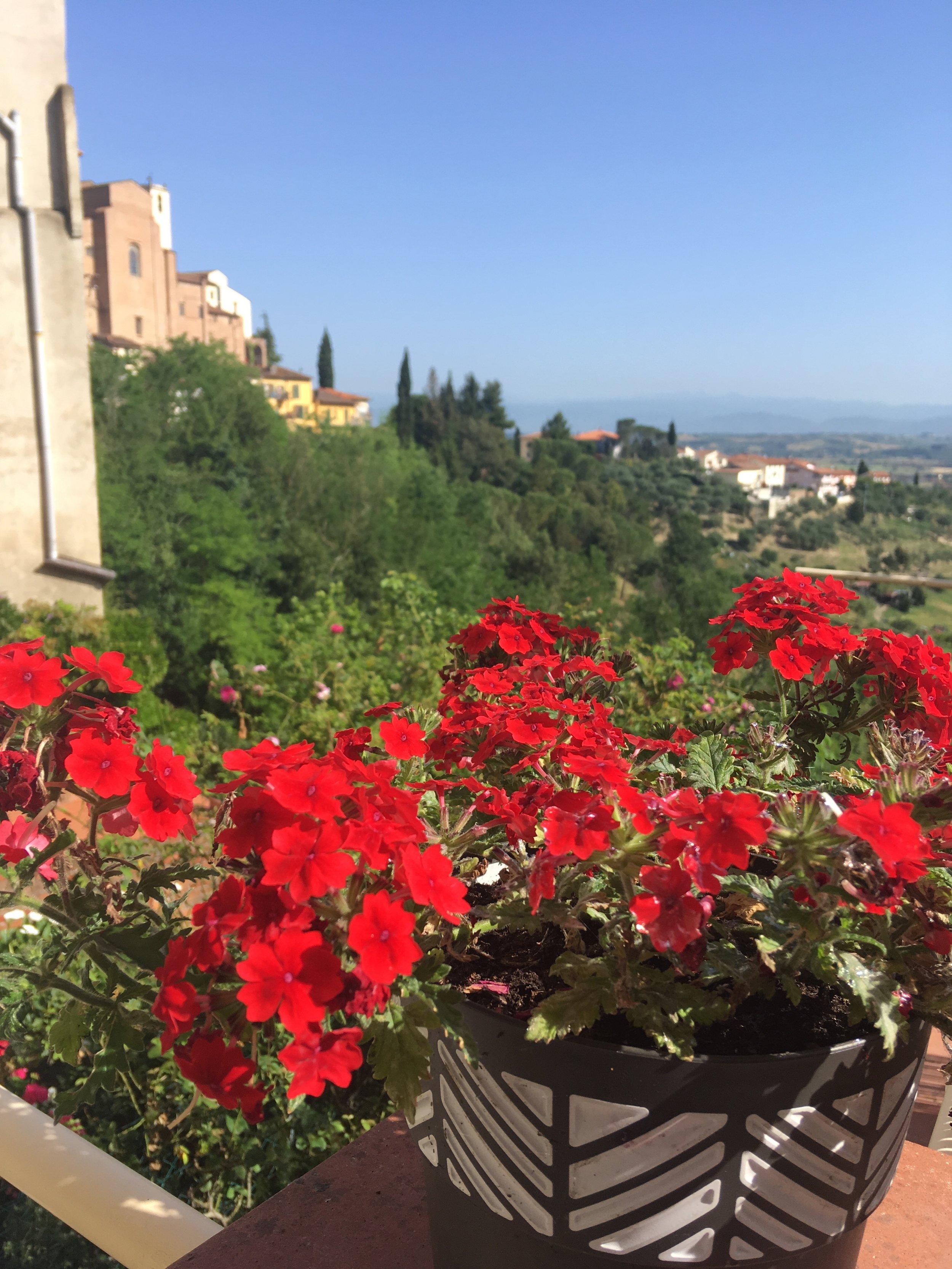 san miniato tuscany geraniums .JPG