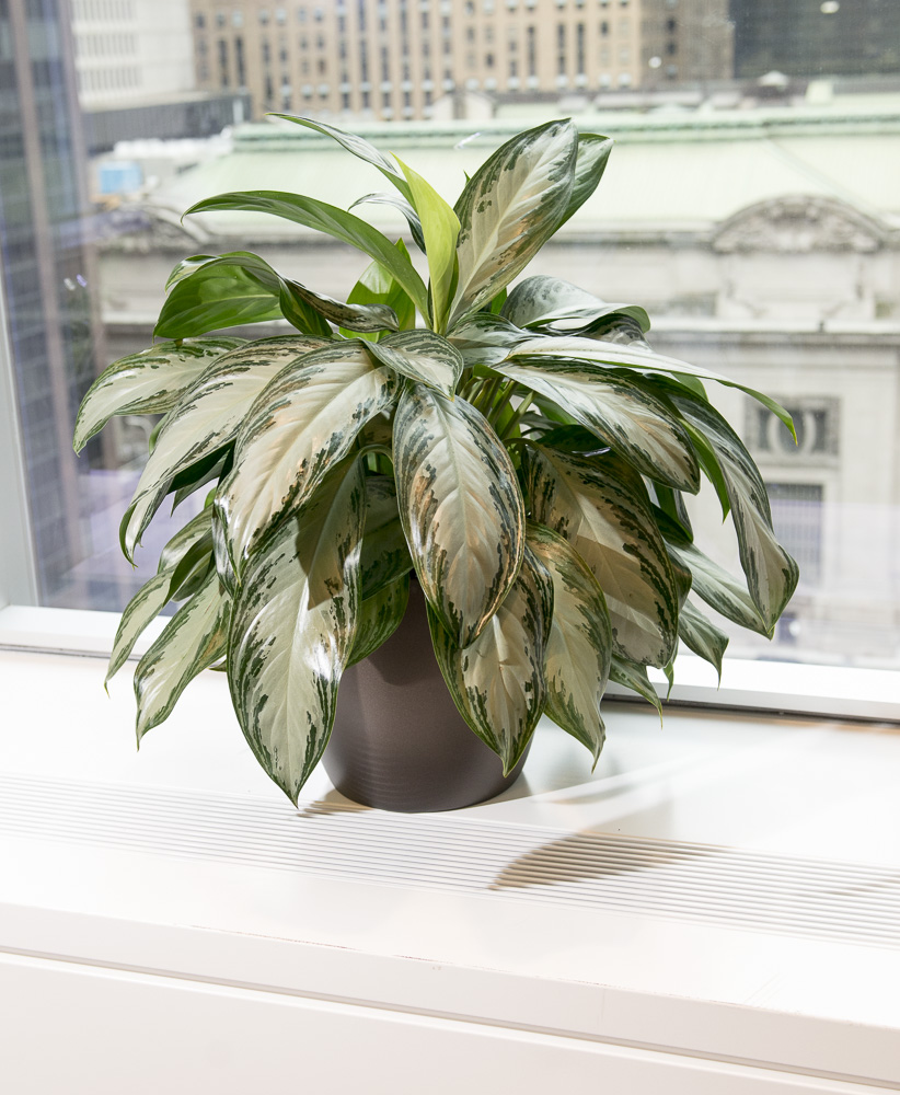 AP16-001 Gugenhiem Plantsweb_23.jpg