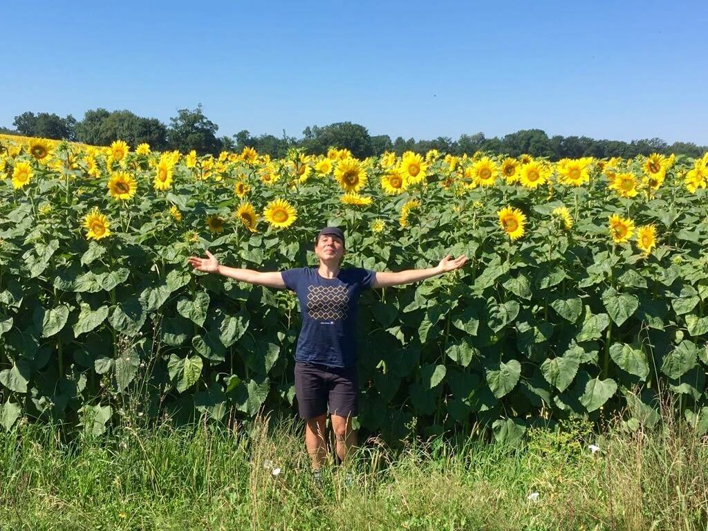 Emily Chappell sunflowers.jpg
