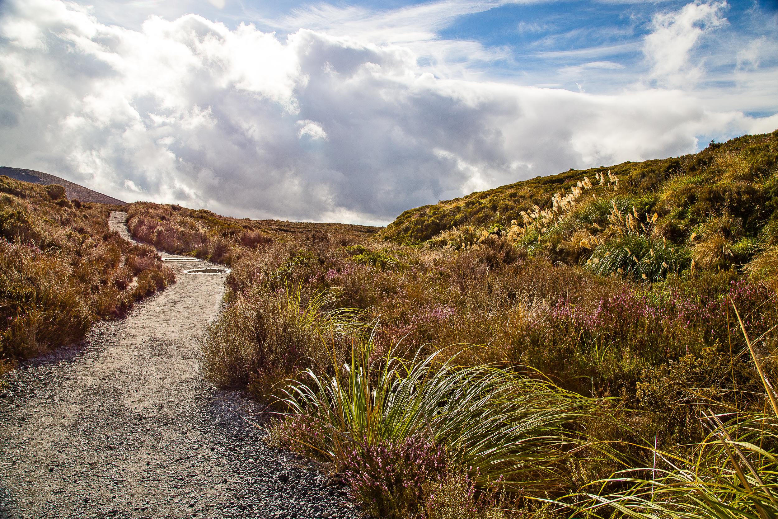NZ_5.jpg