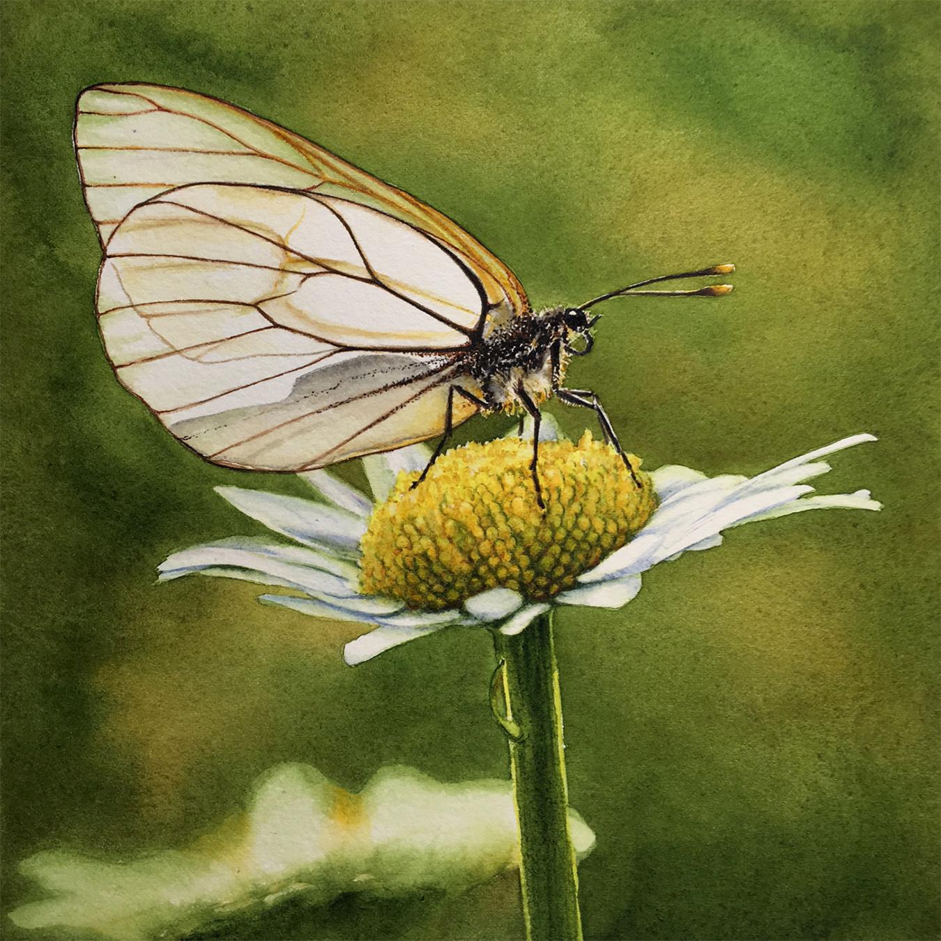 Debbie Bakker_Butterfly 1.jpg