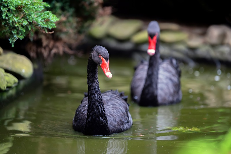 Investing Fads Black Swan.jpg