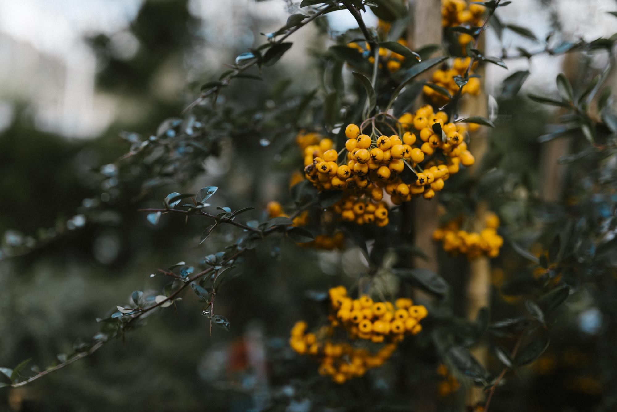 www.sabrinamayphotography.com,Floral,greenhouse-4.jpg