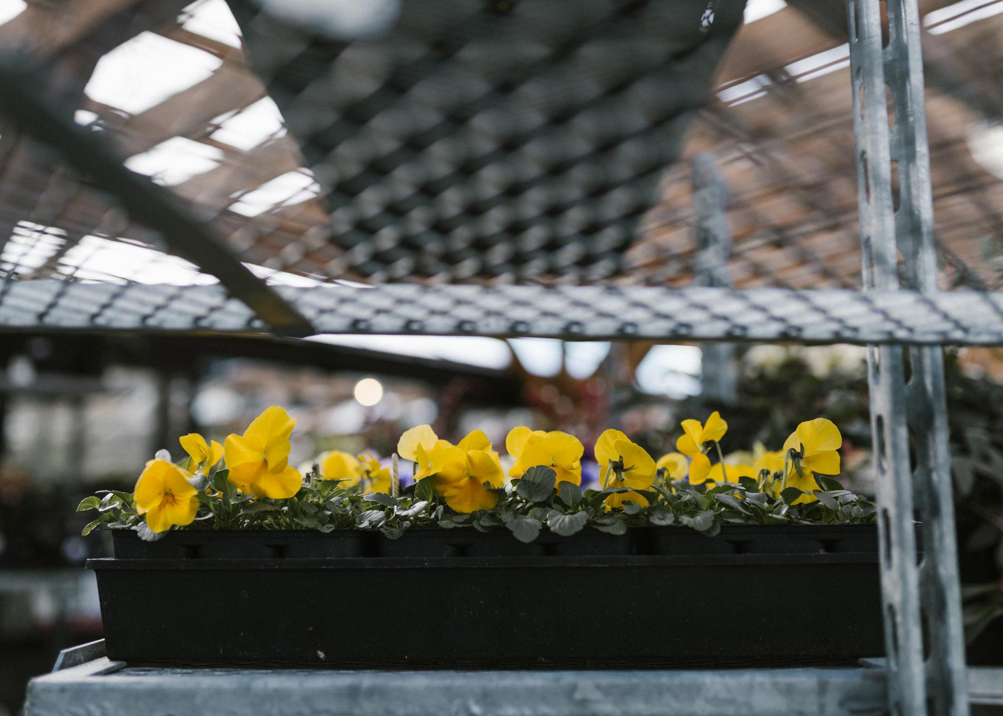 www.sabrinamayphotography.com,Floral,greenhouse-5.jpg