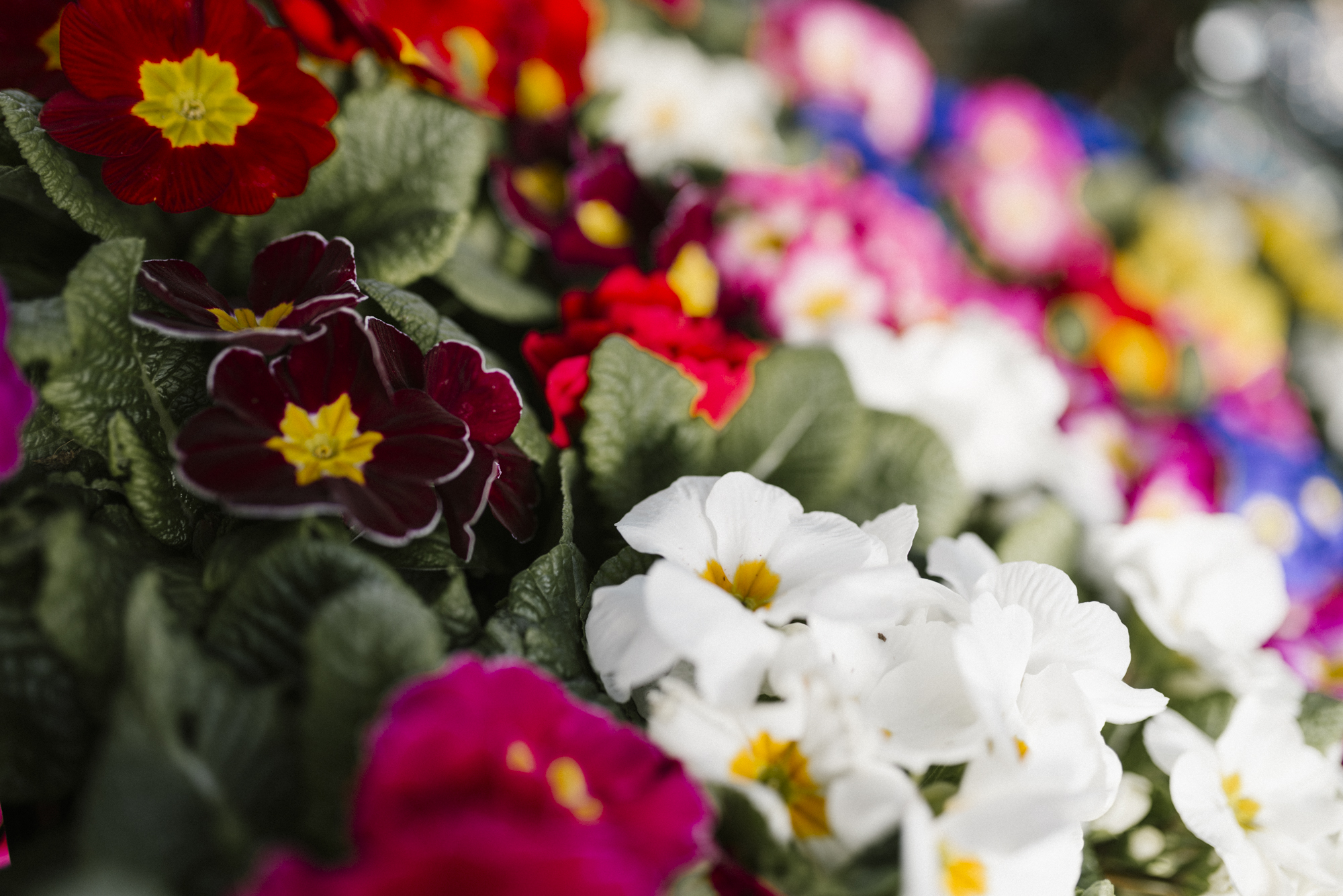 www.sabrinamayphotography.com,Floral,greenhouse-10.jpg