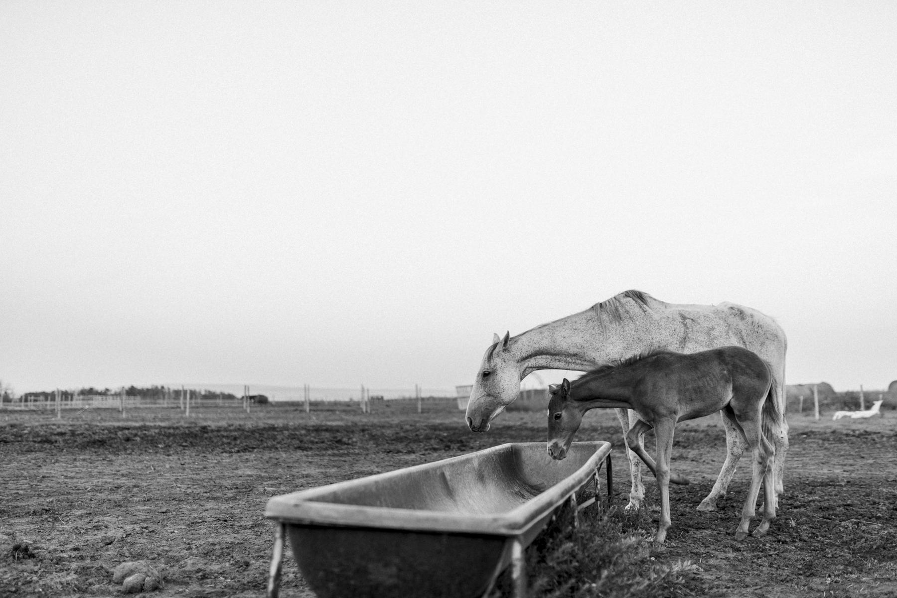 sabrinamayphotography,lifestyle,dawsoncreek-41.jpg