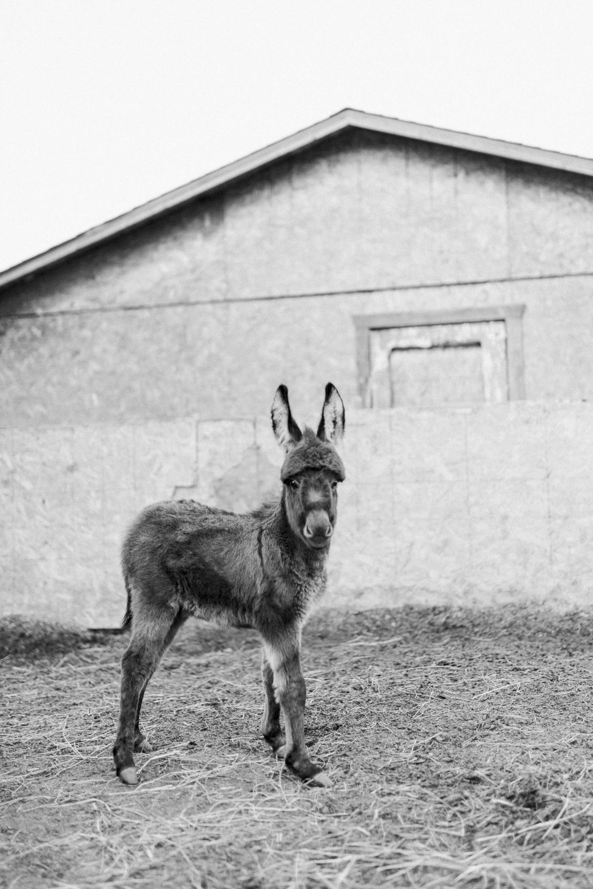 sabrinamayphotography,lifestyle,dawsoncreek-46.jpg