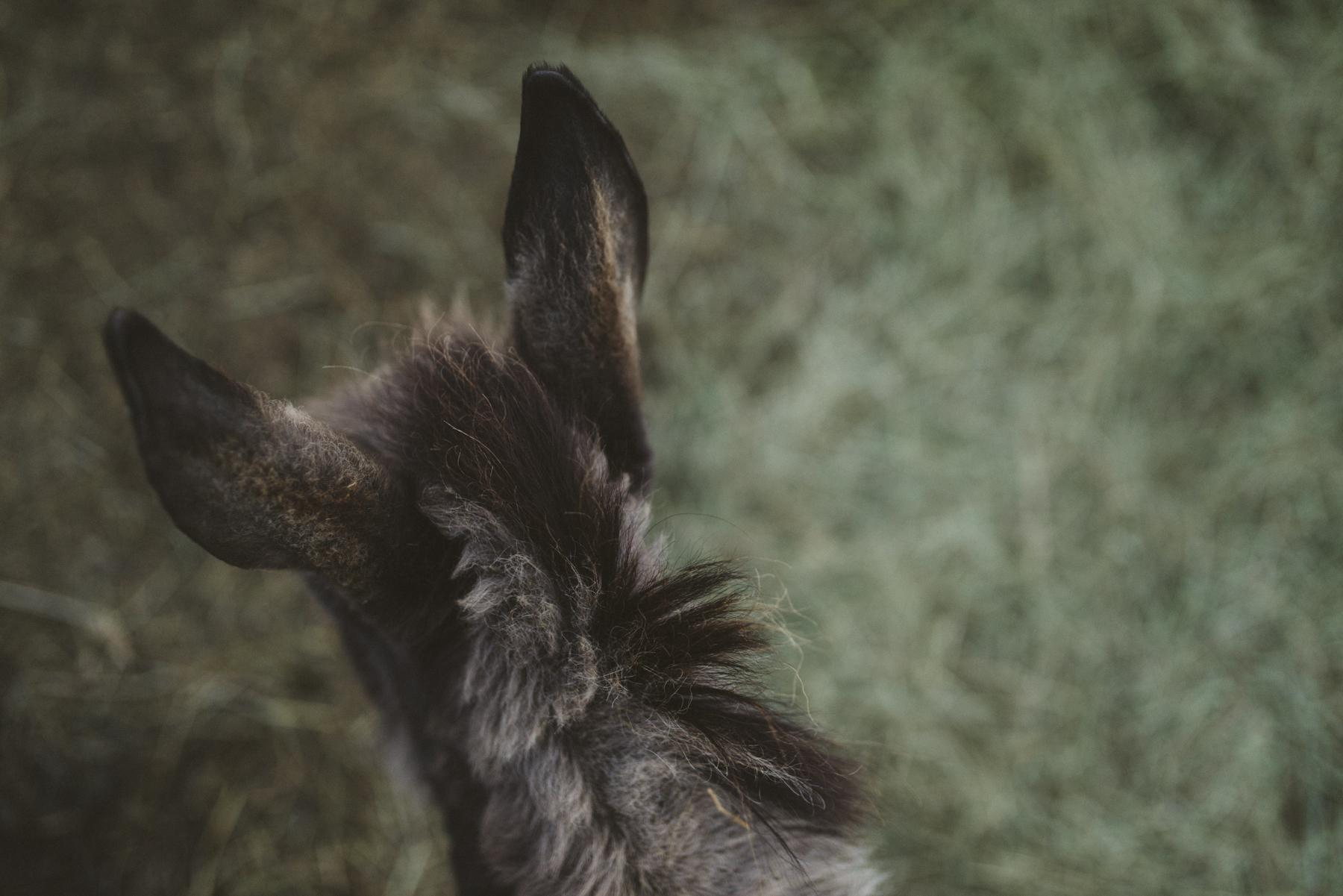 sabrinamayphotography,lifestyle,dawsoncreek-52.jpg