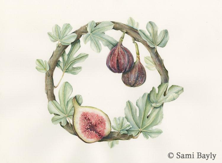 Fig Wreath