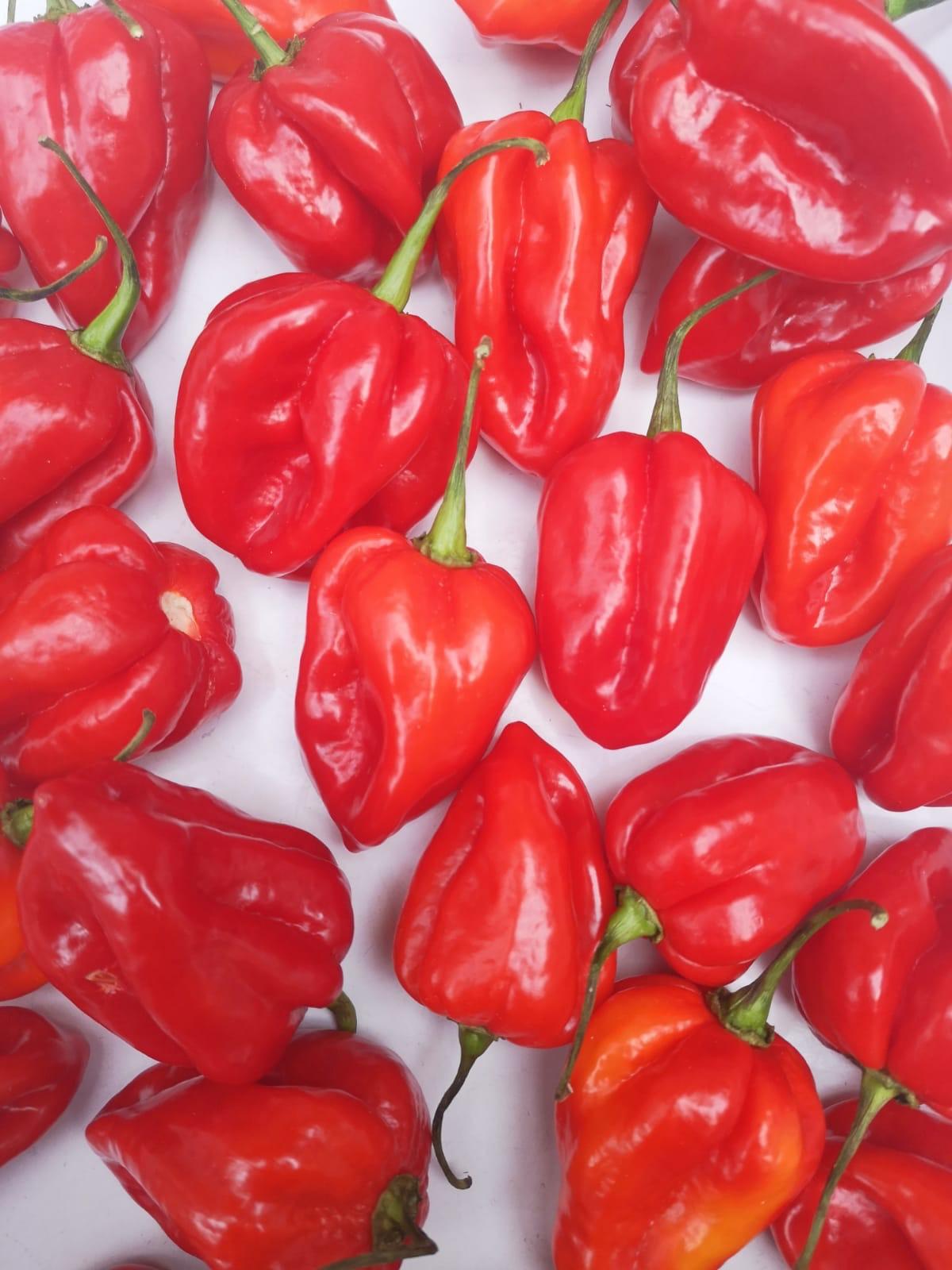 pepper.png