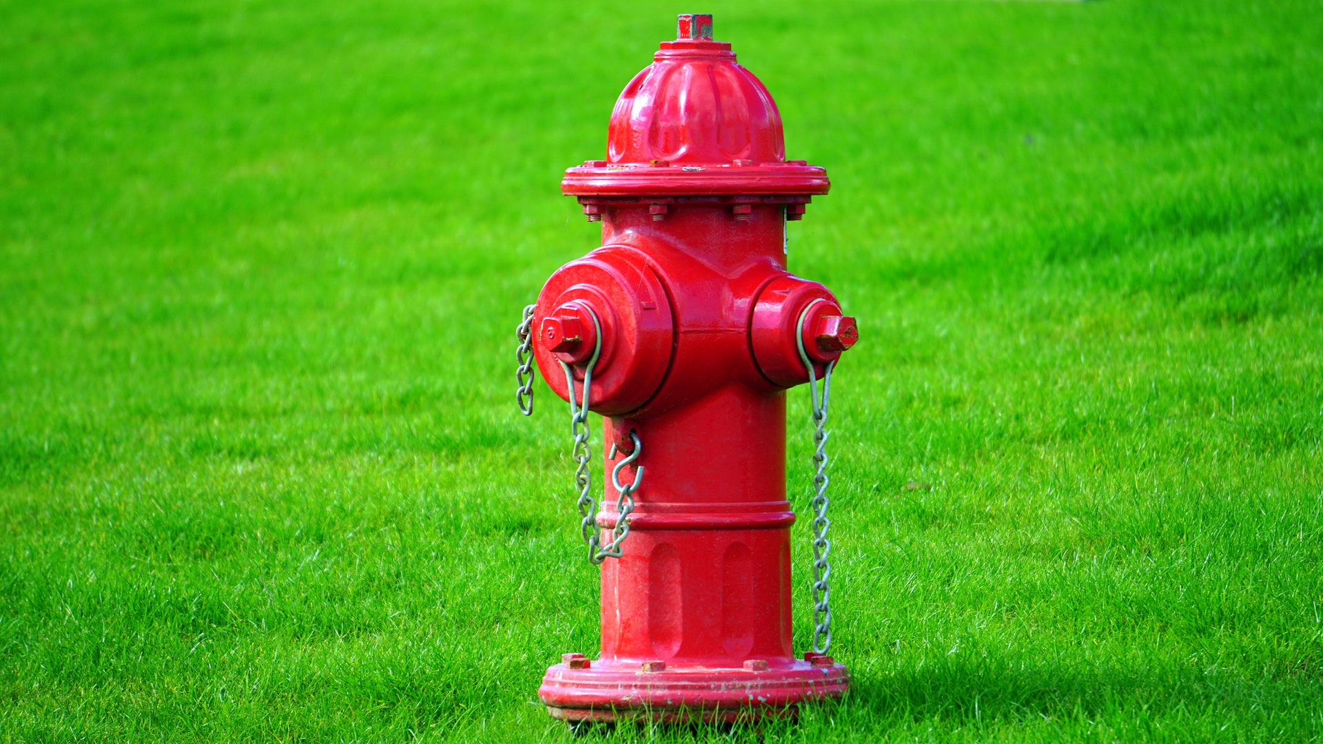 Hydrant to sniff and pee on
