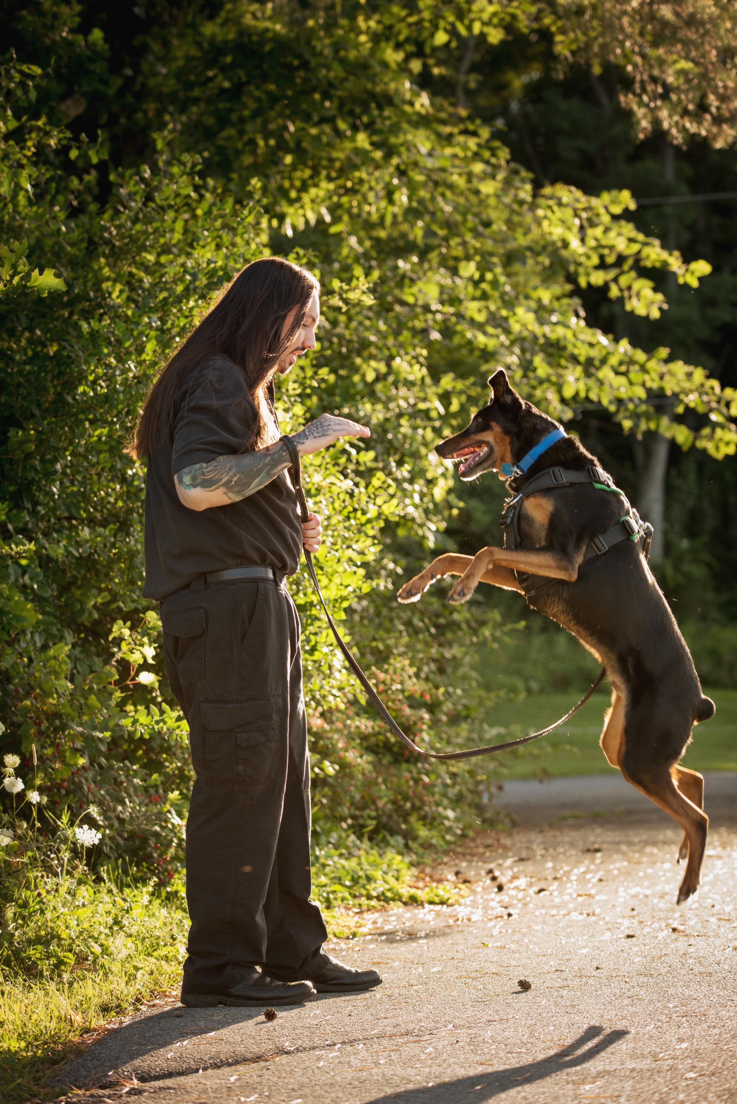 Dog Day Training
