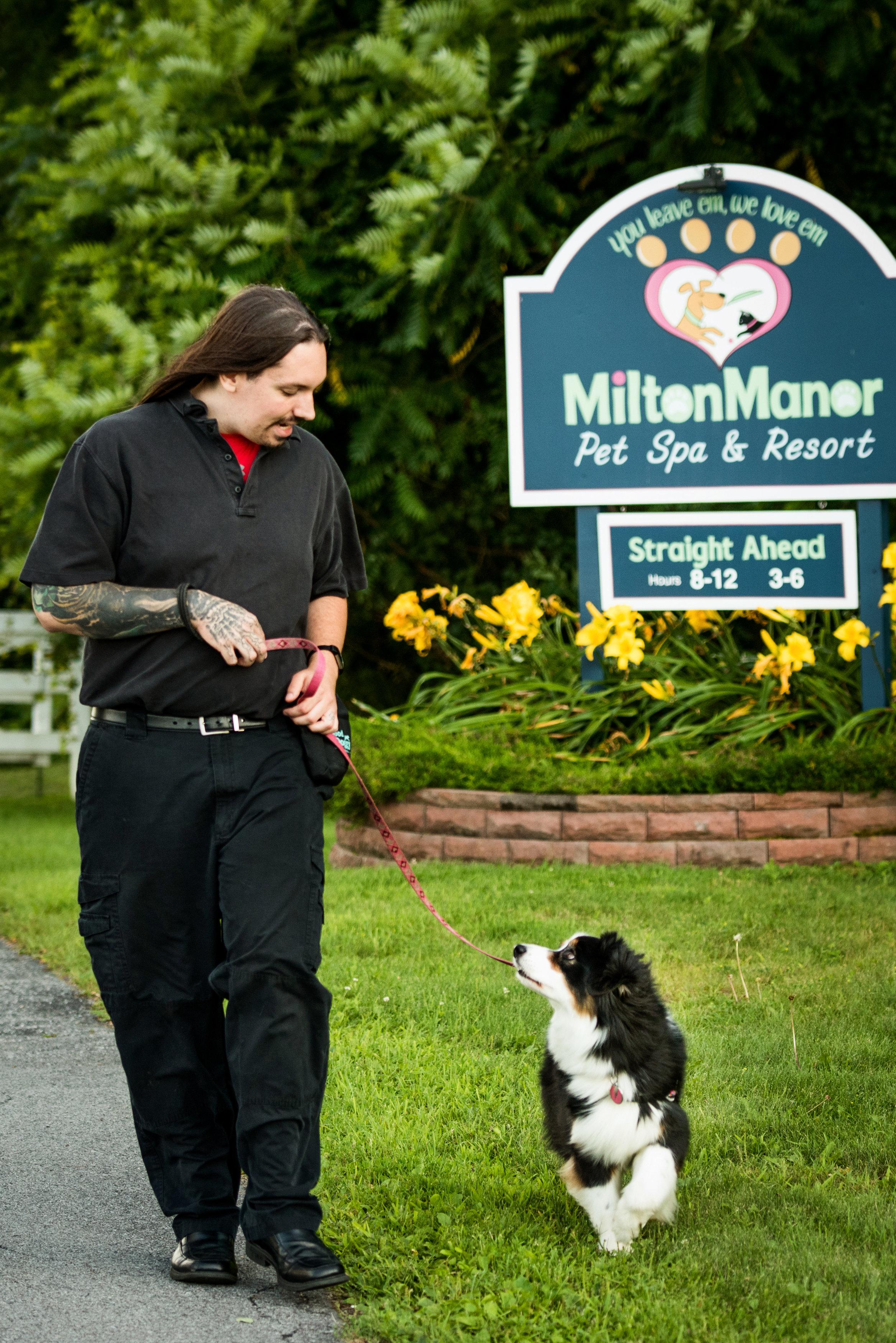 Board and Train Dog Training