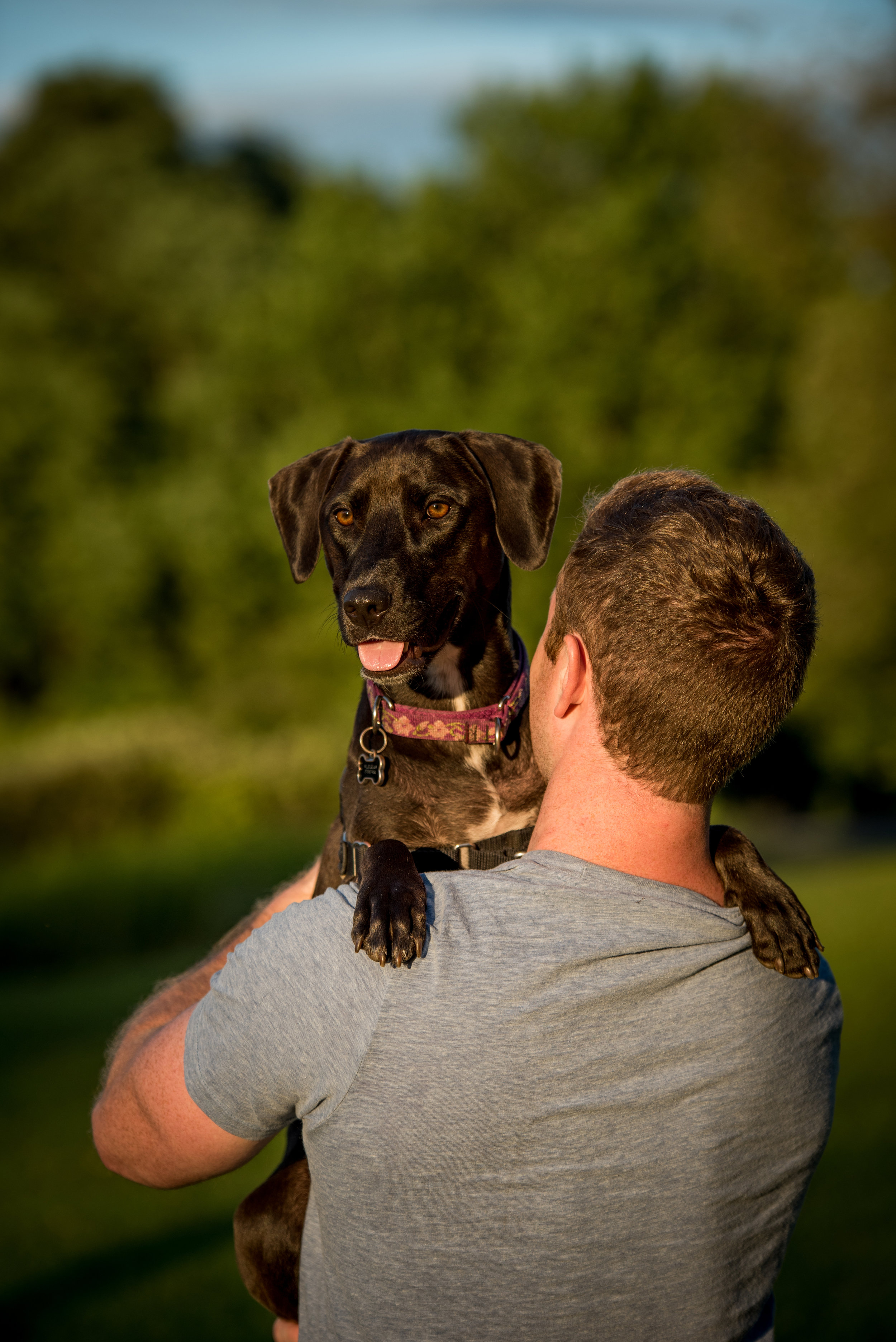 Private Coaching Dog Training