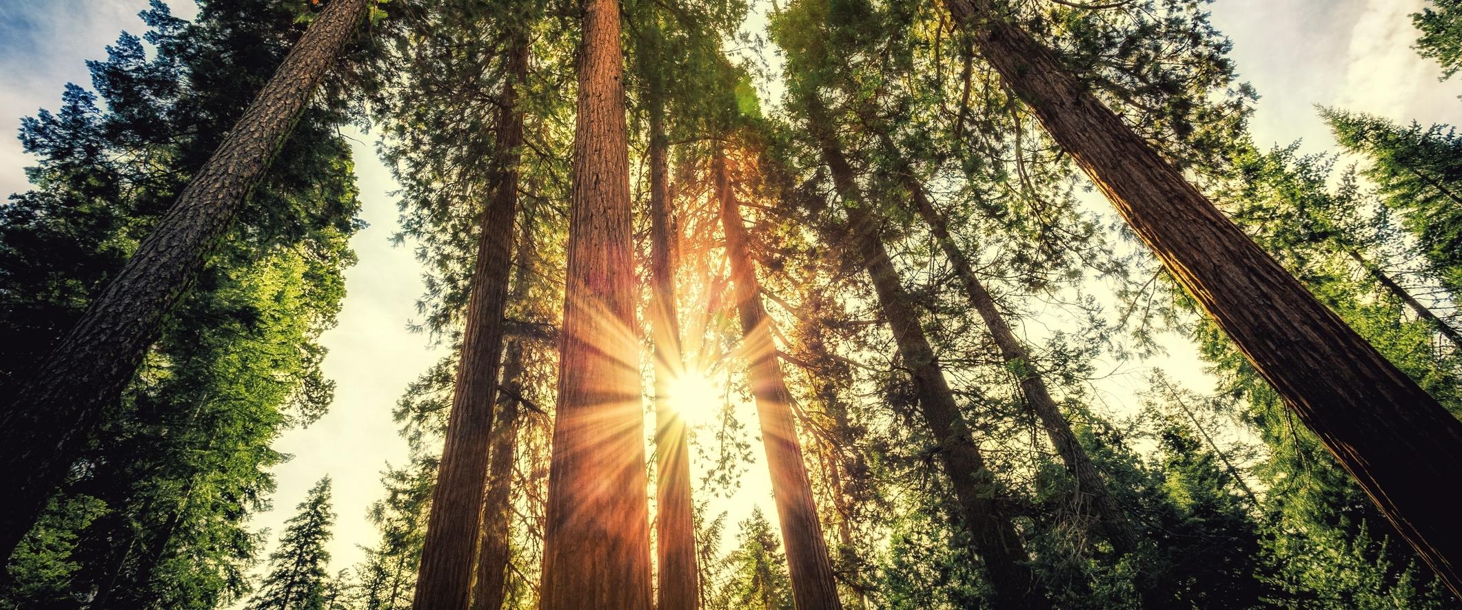 welcome trees.jpg