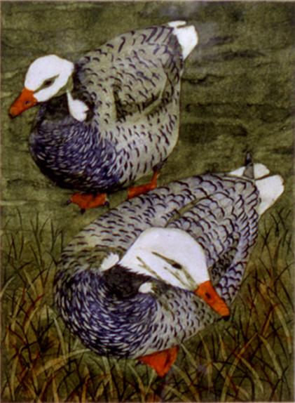 Goosey Goosey