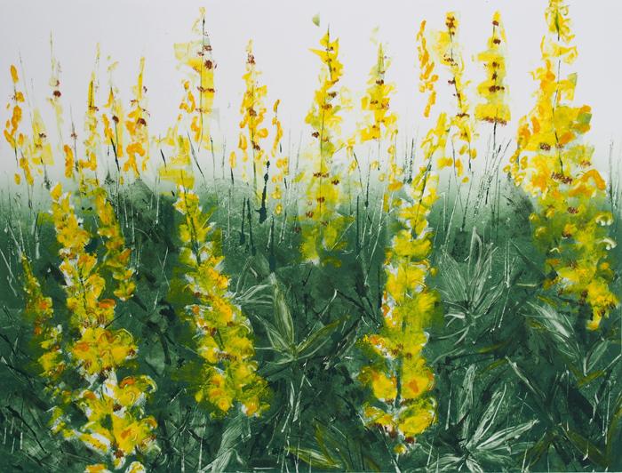 Yellow Lupins I