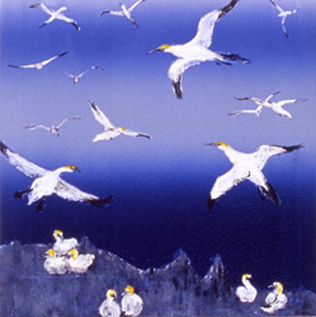 Gannets I