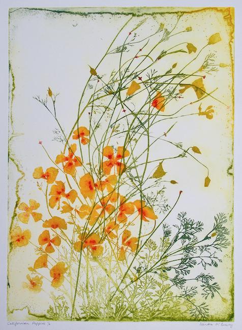 Californian Poppies