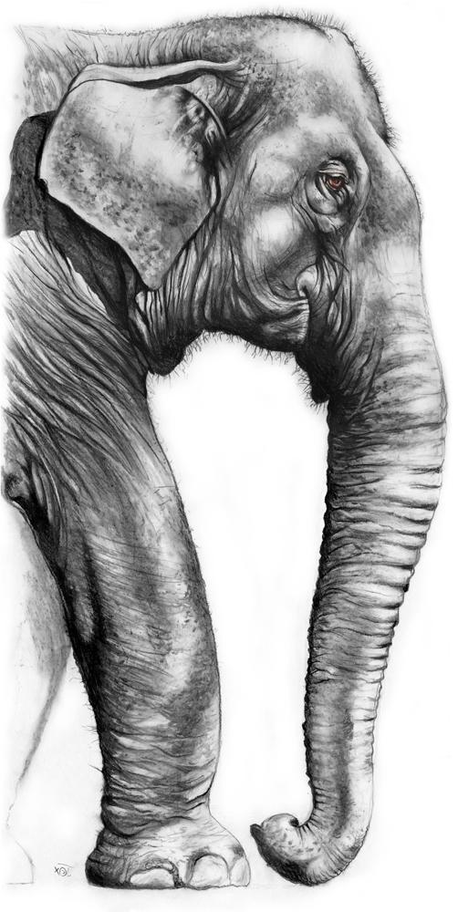 elephant_Homepage_squ.jpg