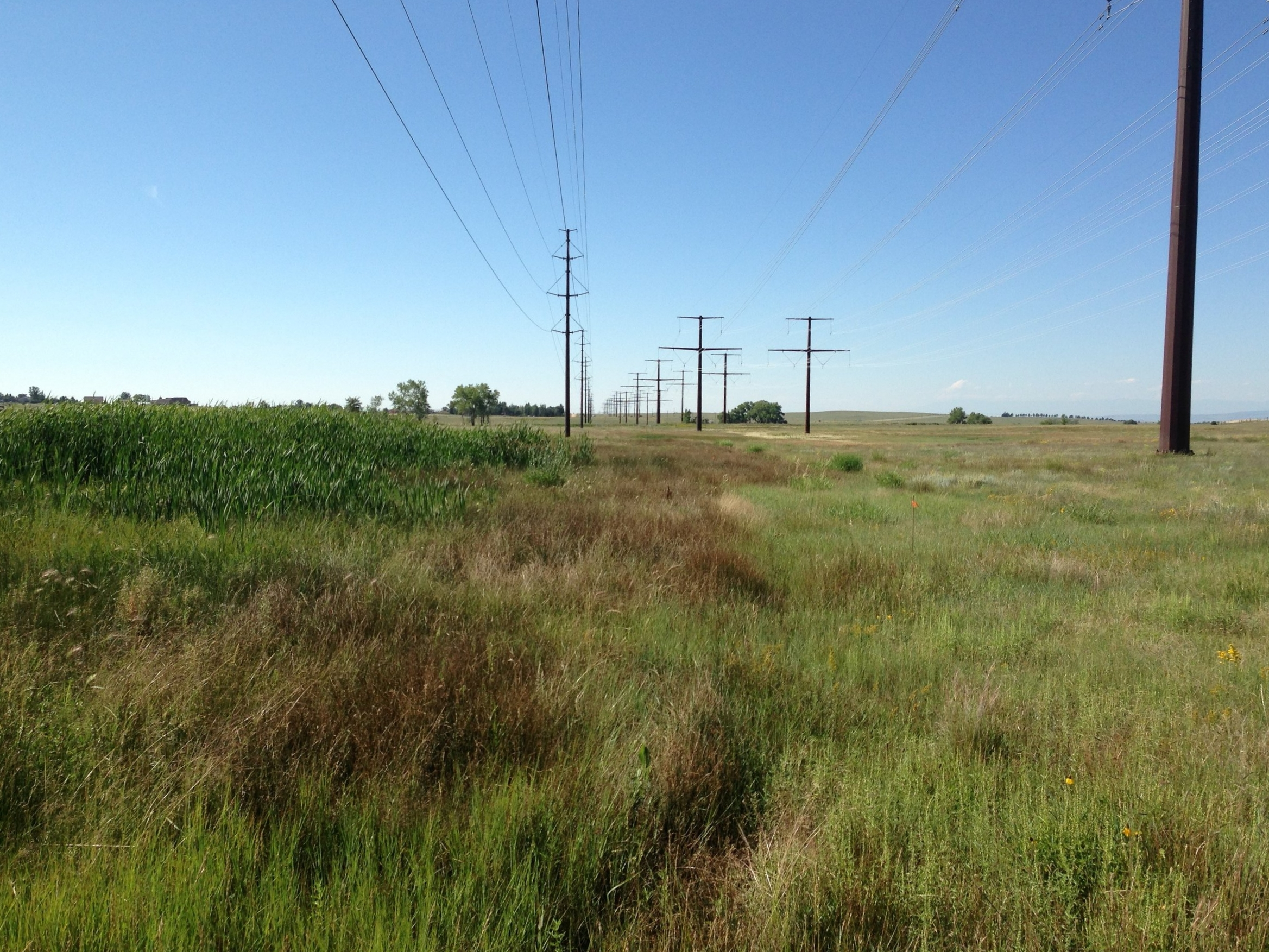Golden West Wind Energy Project - Wildlife Surveys