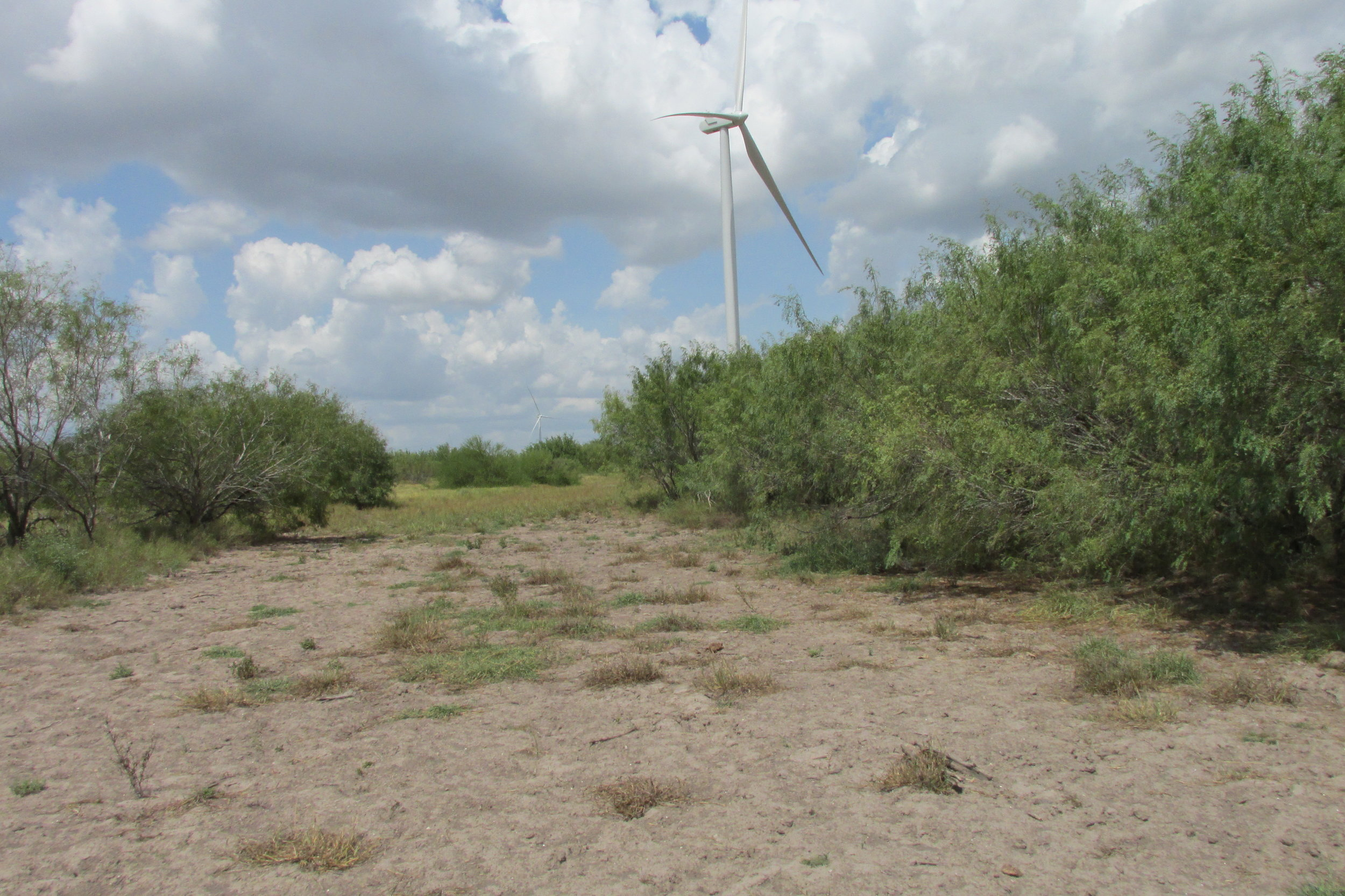 Los Vientos III, IV, and V Wind Projects - Wetland Delineation