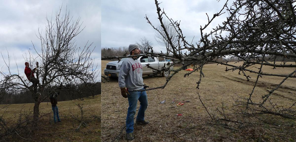 OR-pruning.jpg