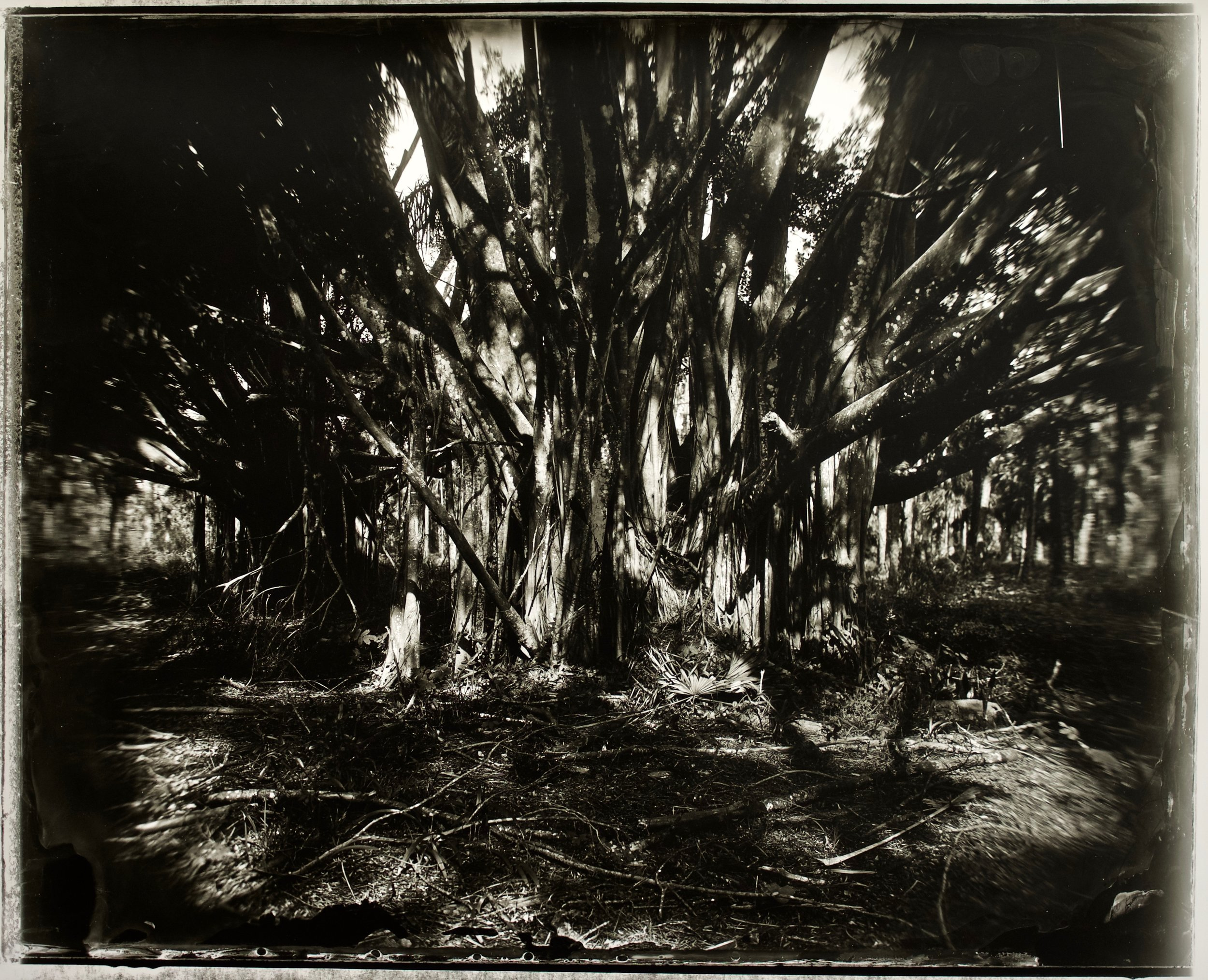 The Sacred and the Mundane 36 in. x 29 in., collodian negative hand printed on Fomatone paper, 2018. #2018-12.jpg