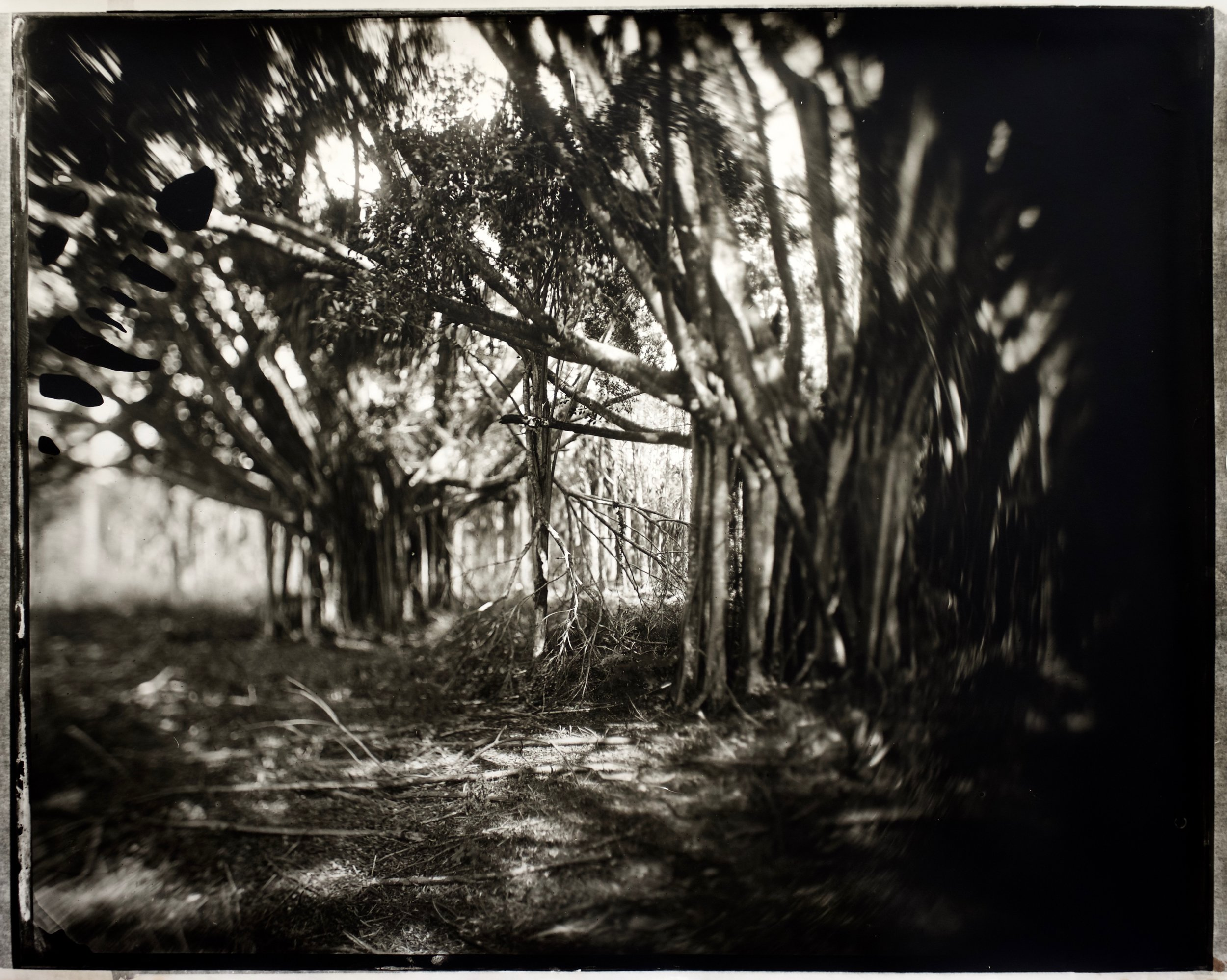 Lectio Divinia, 50 in. x 41 in., collodian negative hand printed on Fomatone paper, 2018. #2018-4.jpg