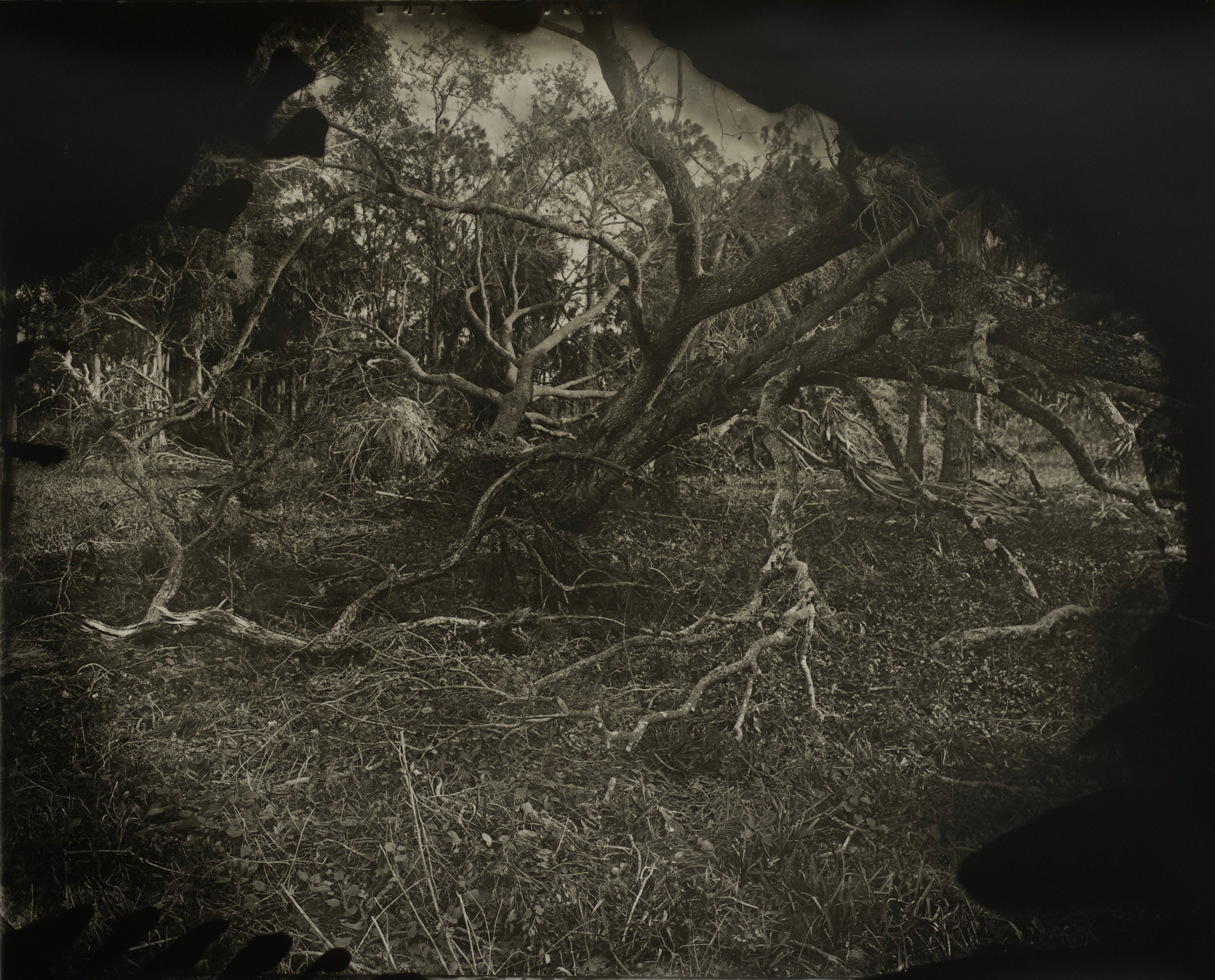 After The Storm, 37 in. x 30 in., collodian negative hand printed on Fomatone paper, 2018. #2018-9.jpg