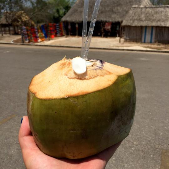 Fresh coconut at Ek Balam