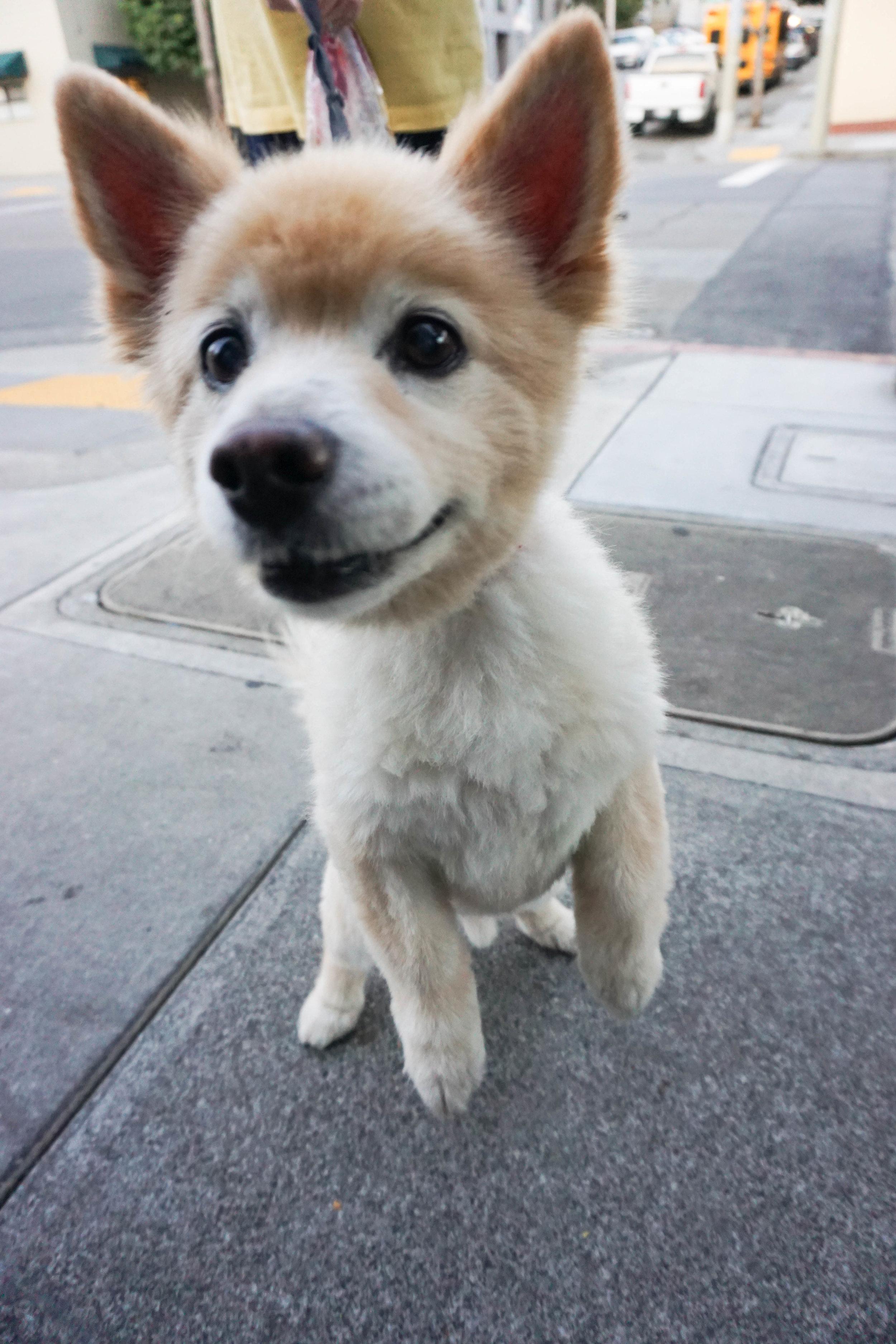 So freakin adorable!