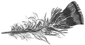 Turkey featherSml.jpg