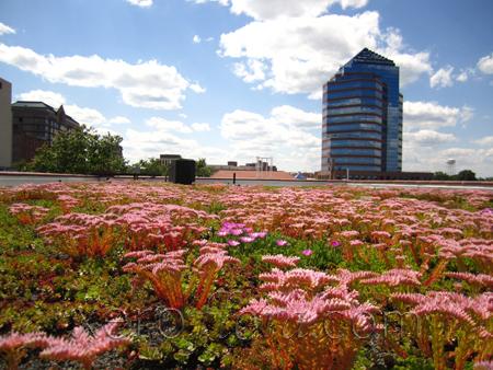 Xeroflor America HQ - Durham // NC