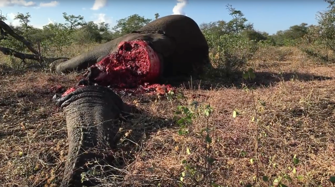 Elephants are being poached at a staggering rate across Africa and the protective agencies need support.