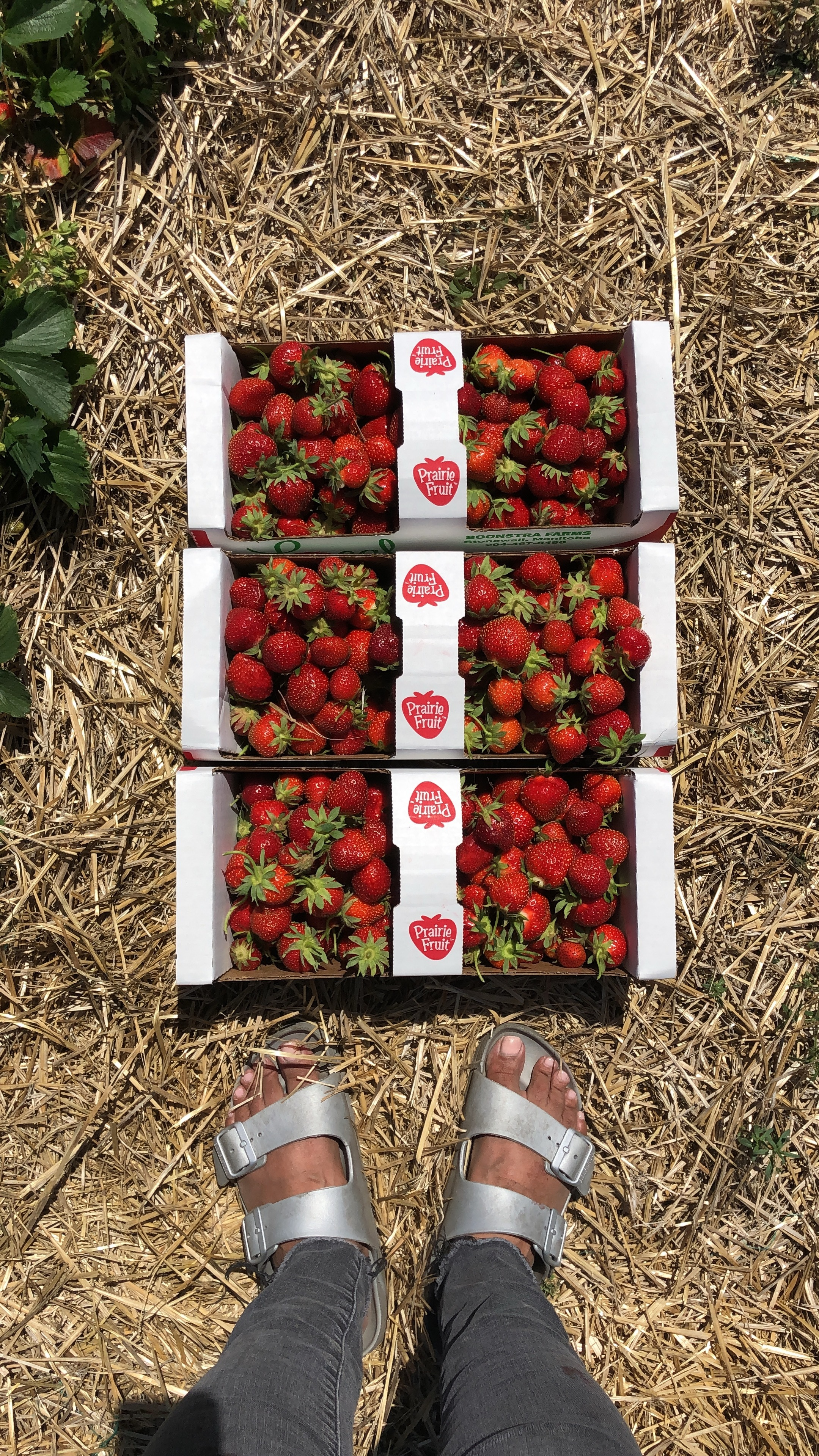 strawberries .JPG