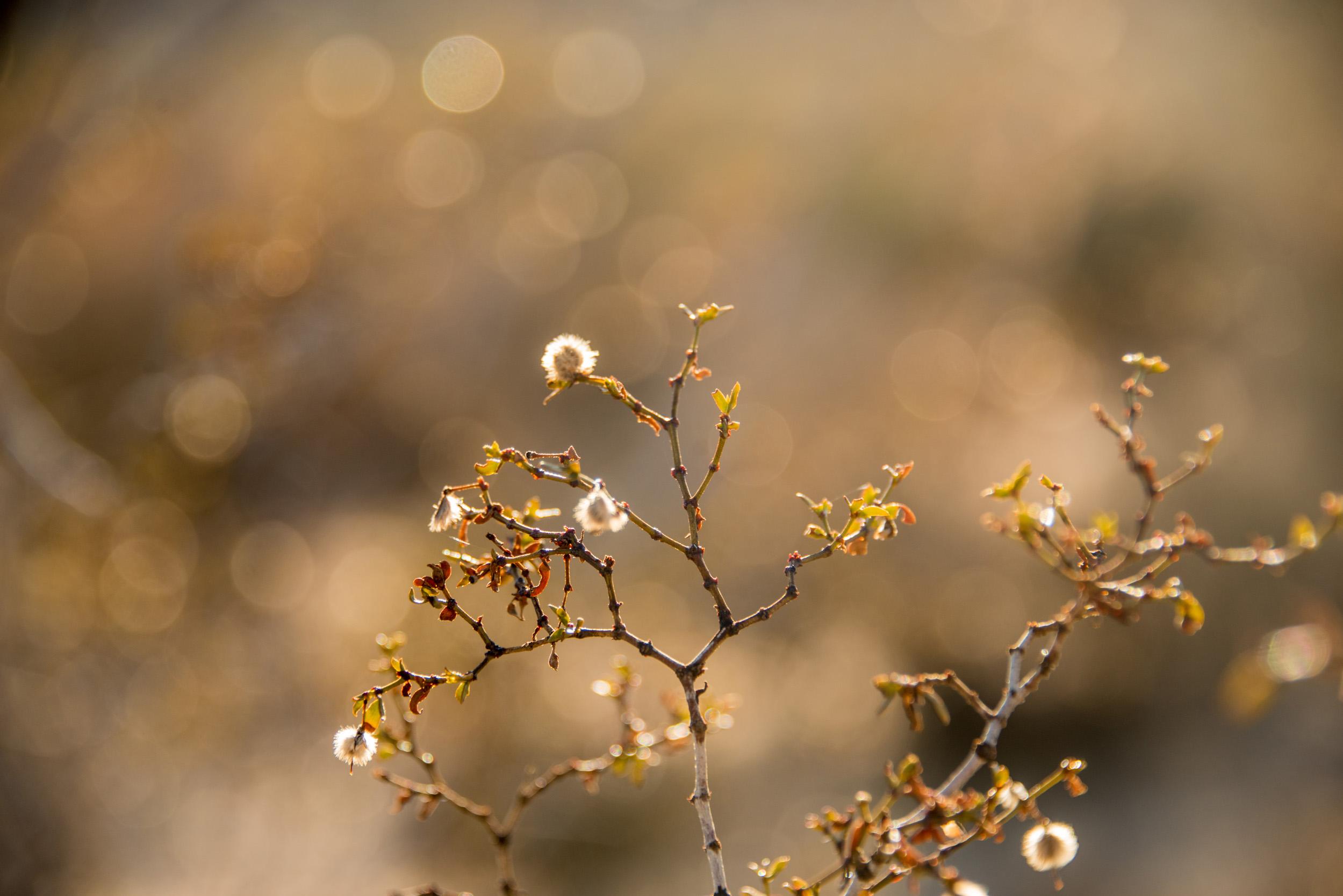 Britt_Nemeth_Studios_PhotographyNature_Spaces_Places_Vaction_Travel027.jpg