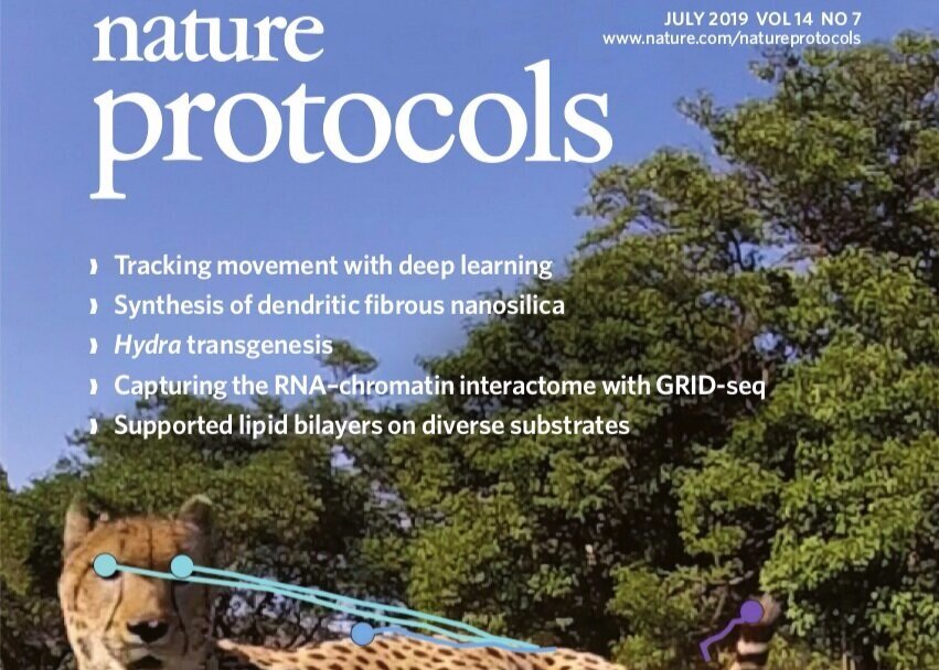 Tanmay Nath*, Alexander Mathis*, An Chi Chen, Amir Patel, Matthias Bethge, and Mackenzie W. Mathis. Using DeepLabCut for 3D markerless pose estimation across species and behaviors. Nature Protocols. 2019. s41596-019-0176-0 *co-first authors -