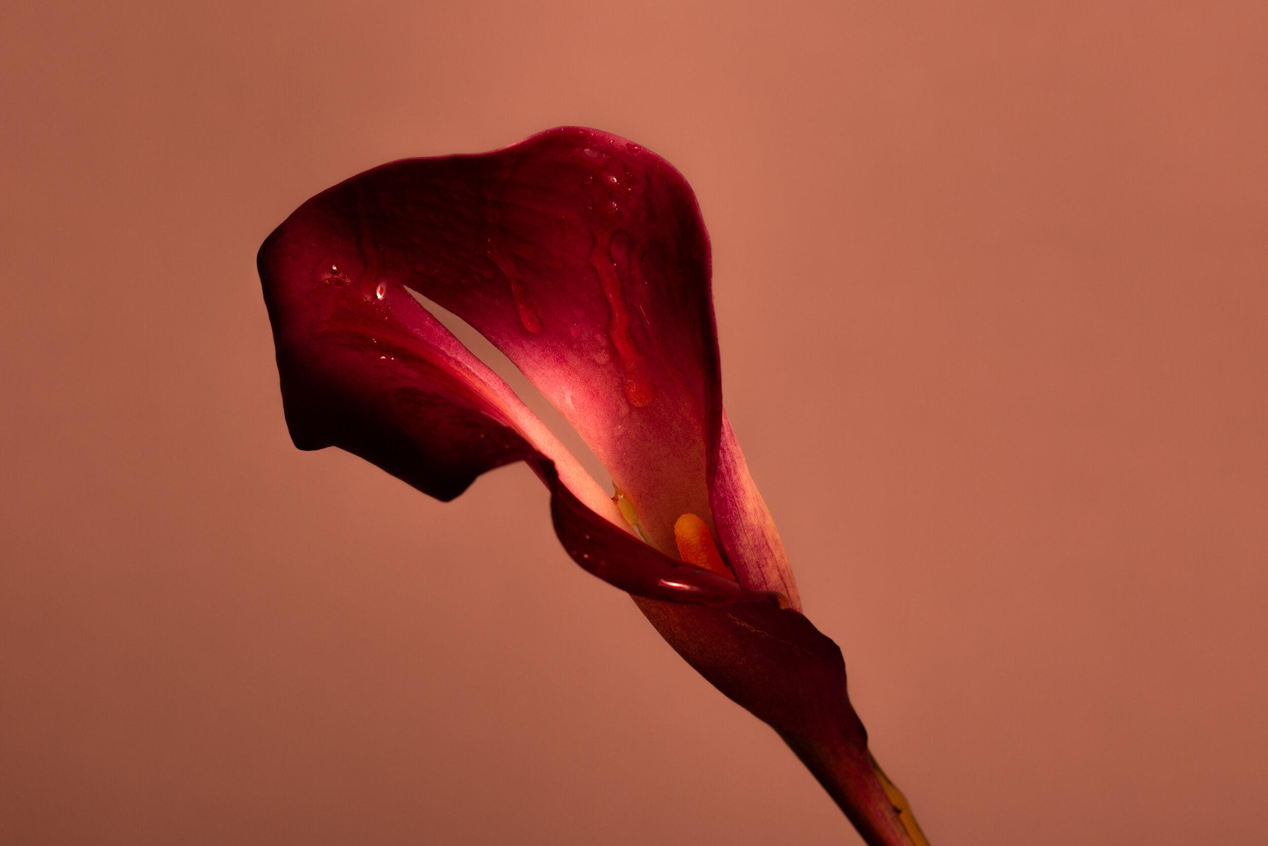 flower-069.jpg